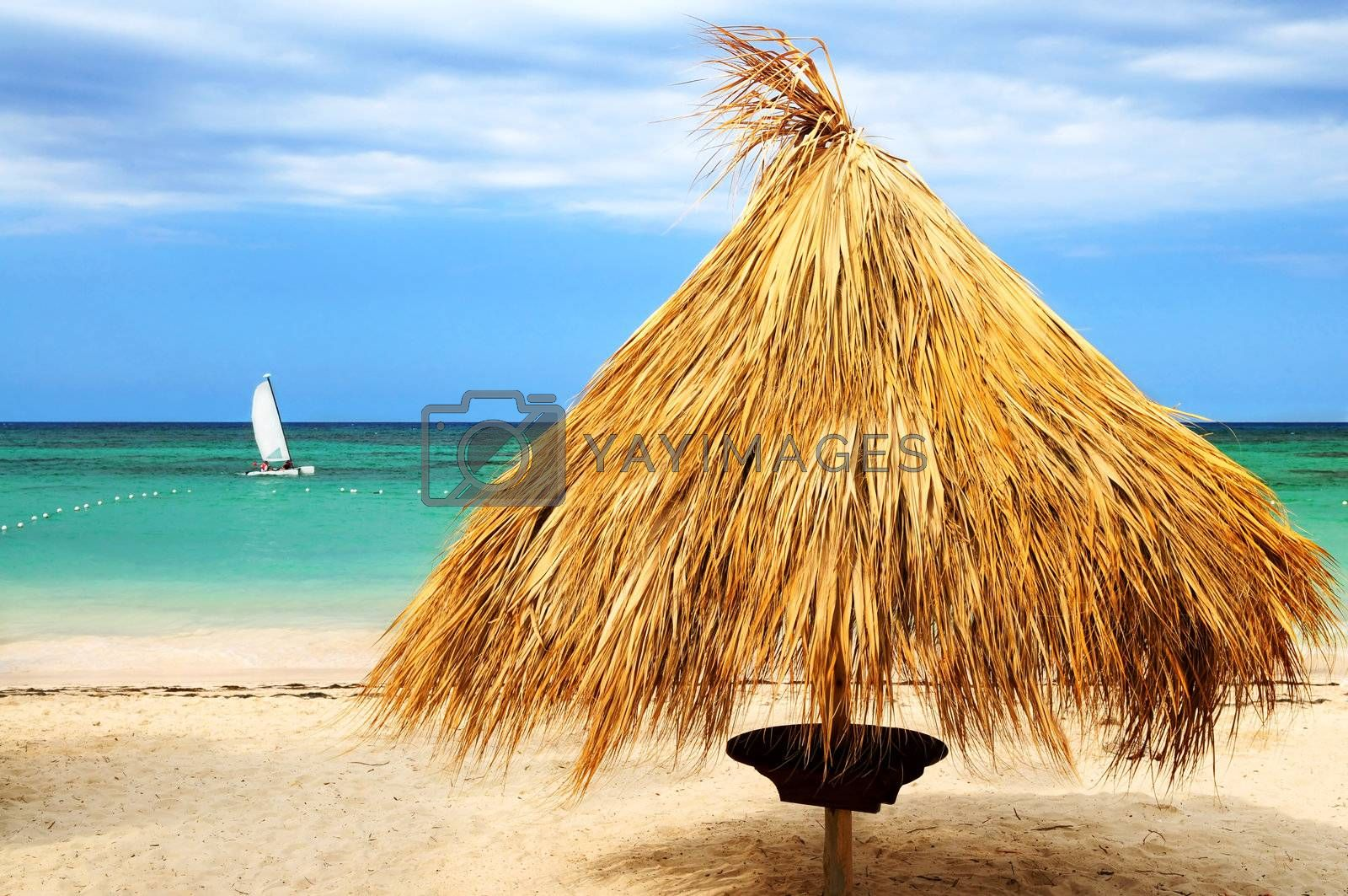 Tropical beach of a Caribbean island with palm branches shelter