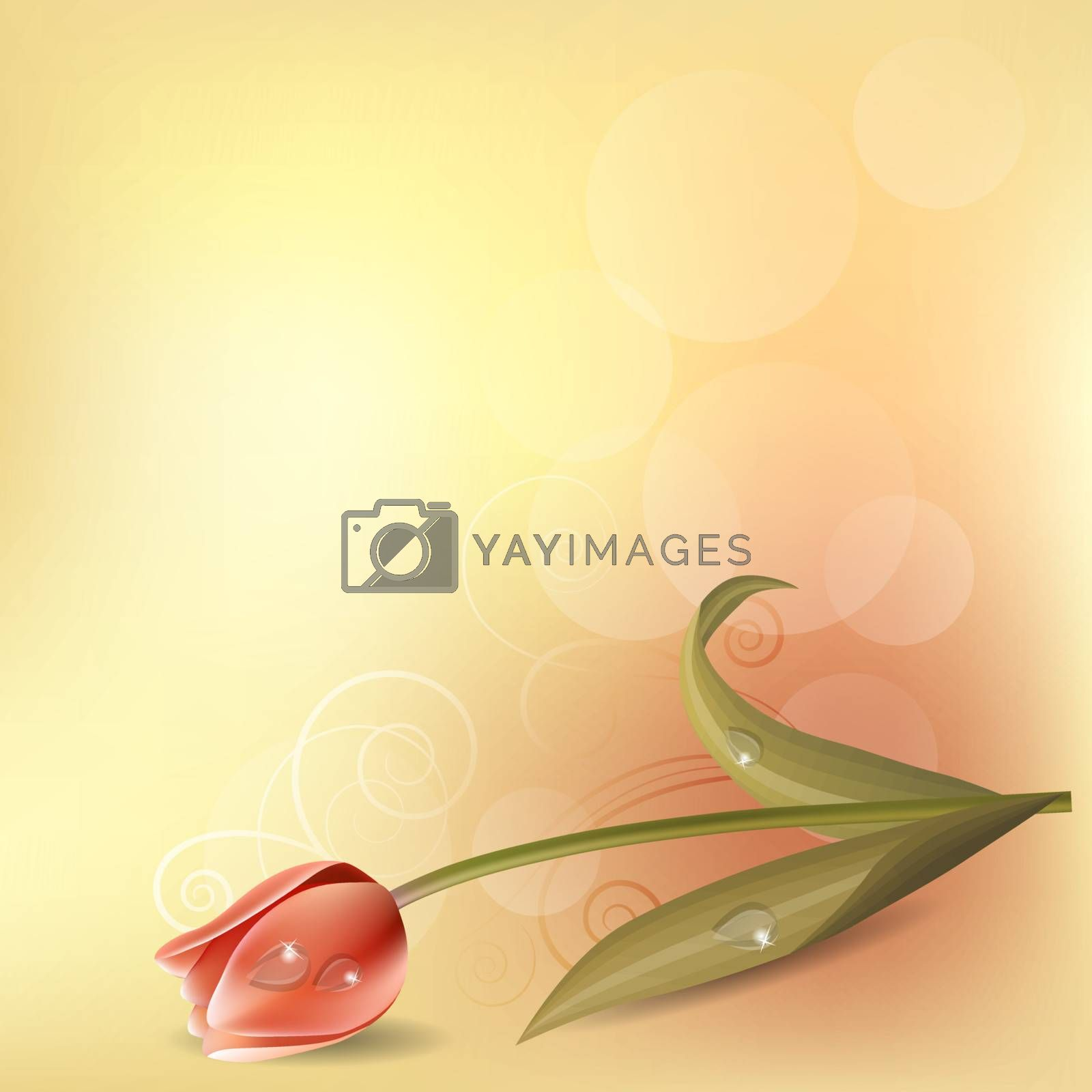 Light pastel background with pink tulip