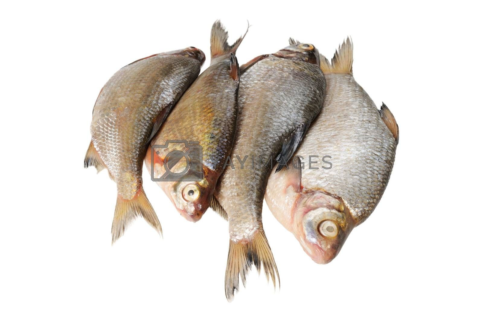 Several fresh freshwater fish. Bream and roach. Isolated on white.