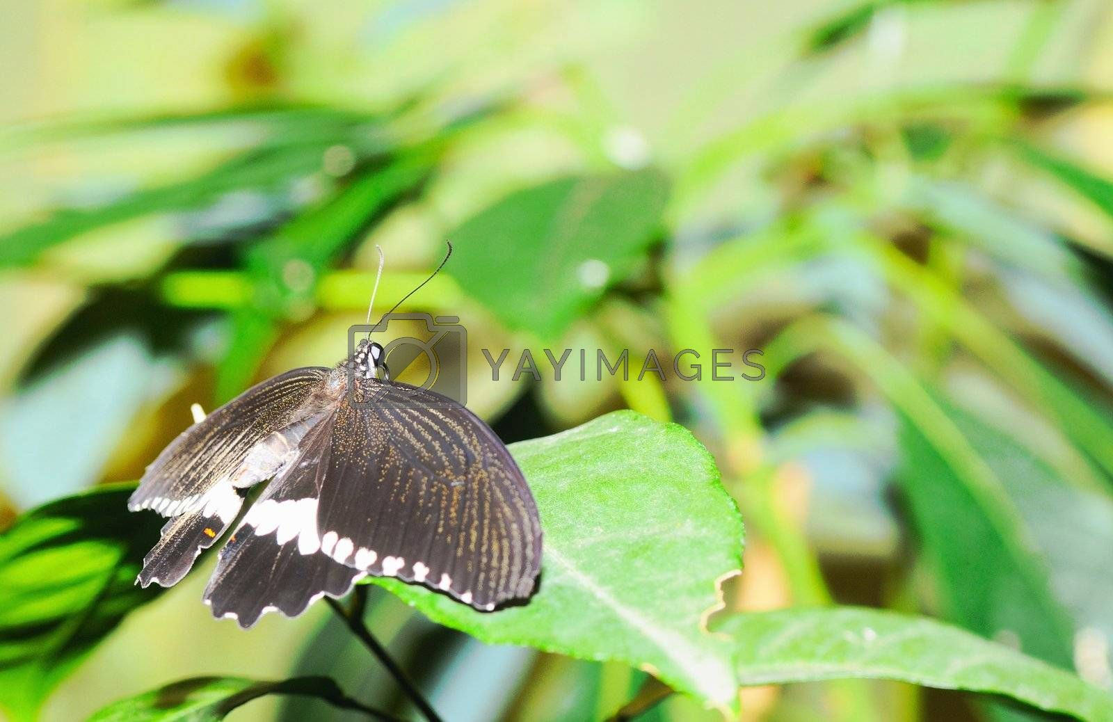 Butterfly on a leaf. On background of leaves.