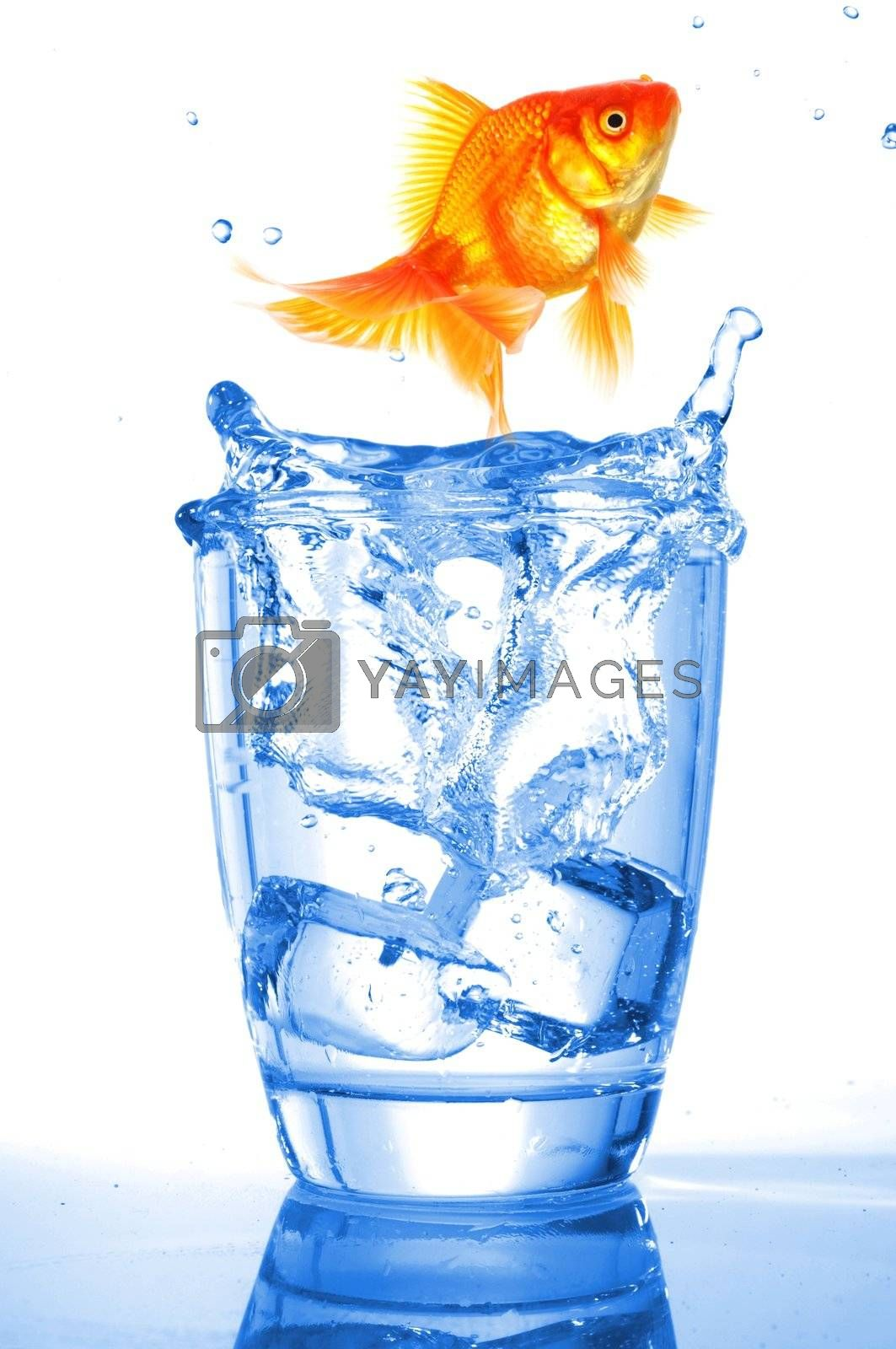 goldfish in drink glass showing jail prison free or freedom concept
