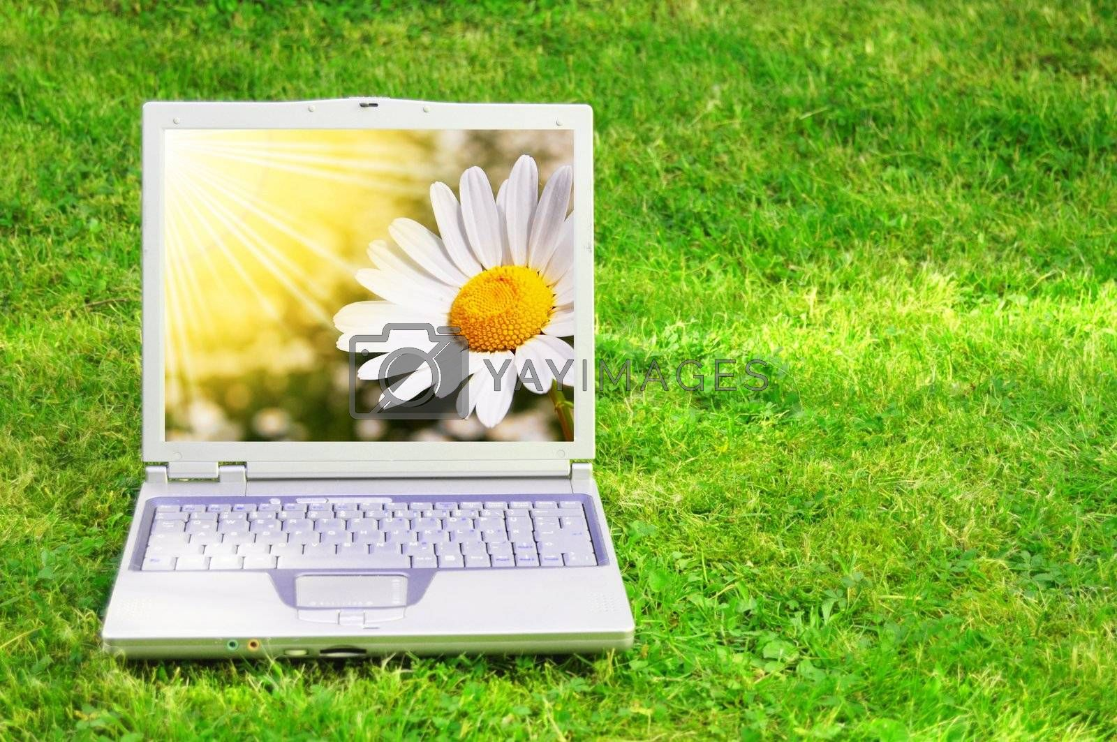 flowers and laptop or notebook on green grass with copyspace