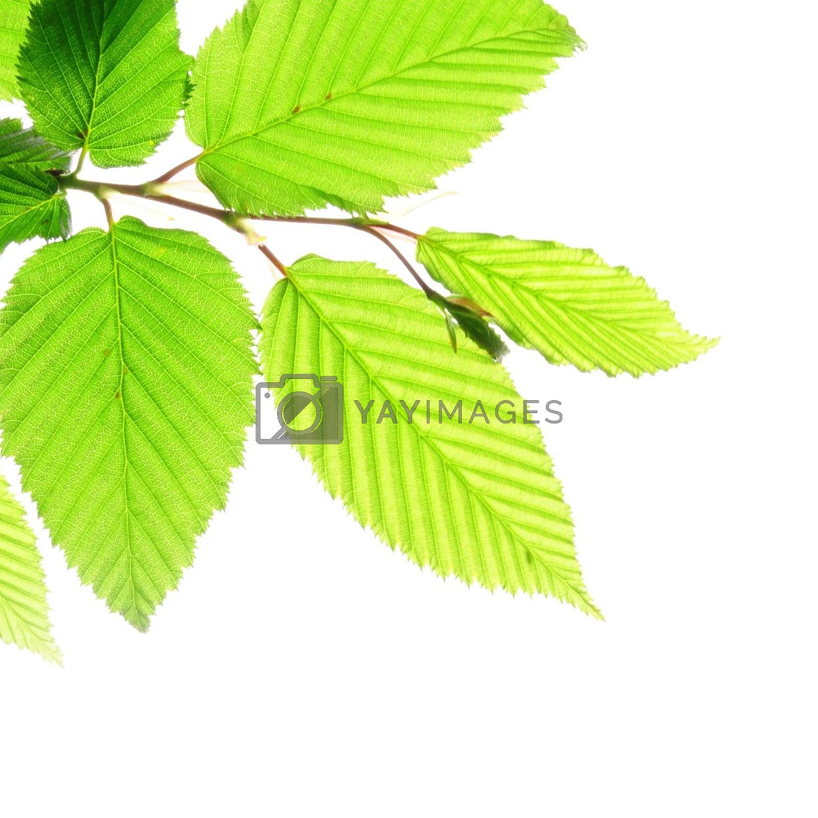 summer or nature concept with green leaf and sky