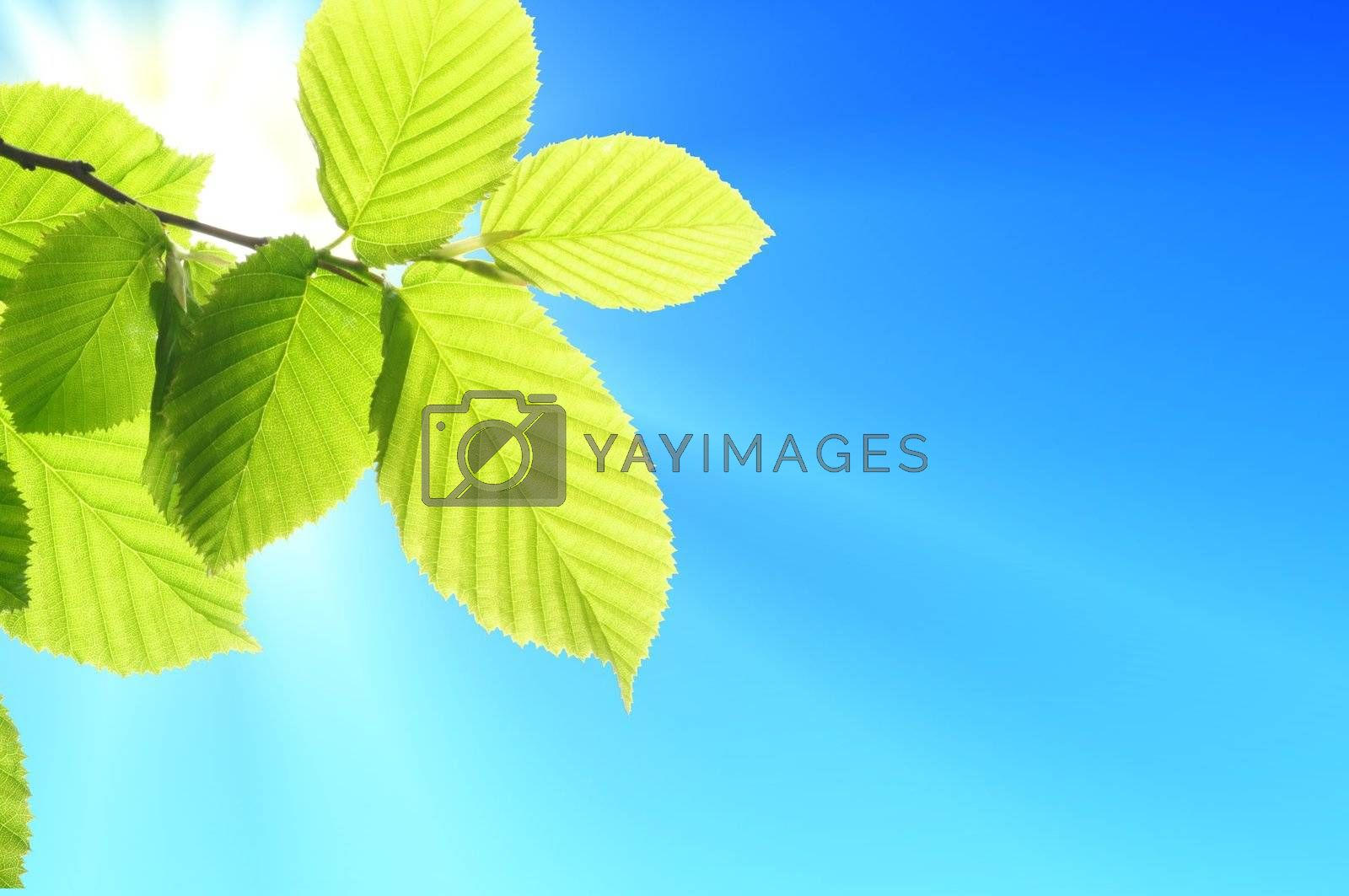 green leaf and blue sky with sun in summer