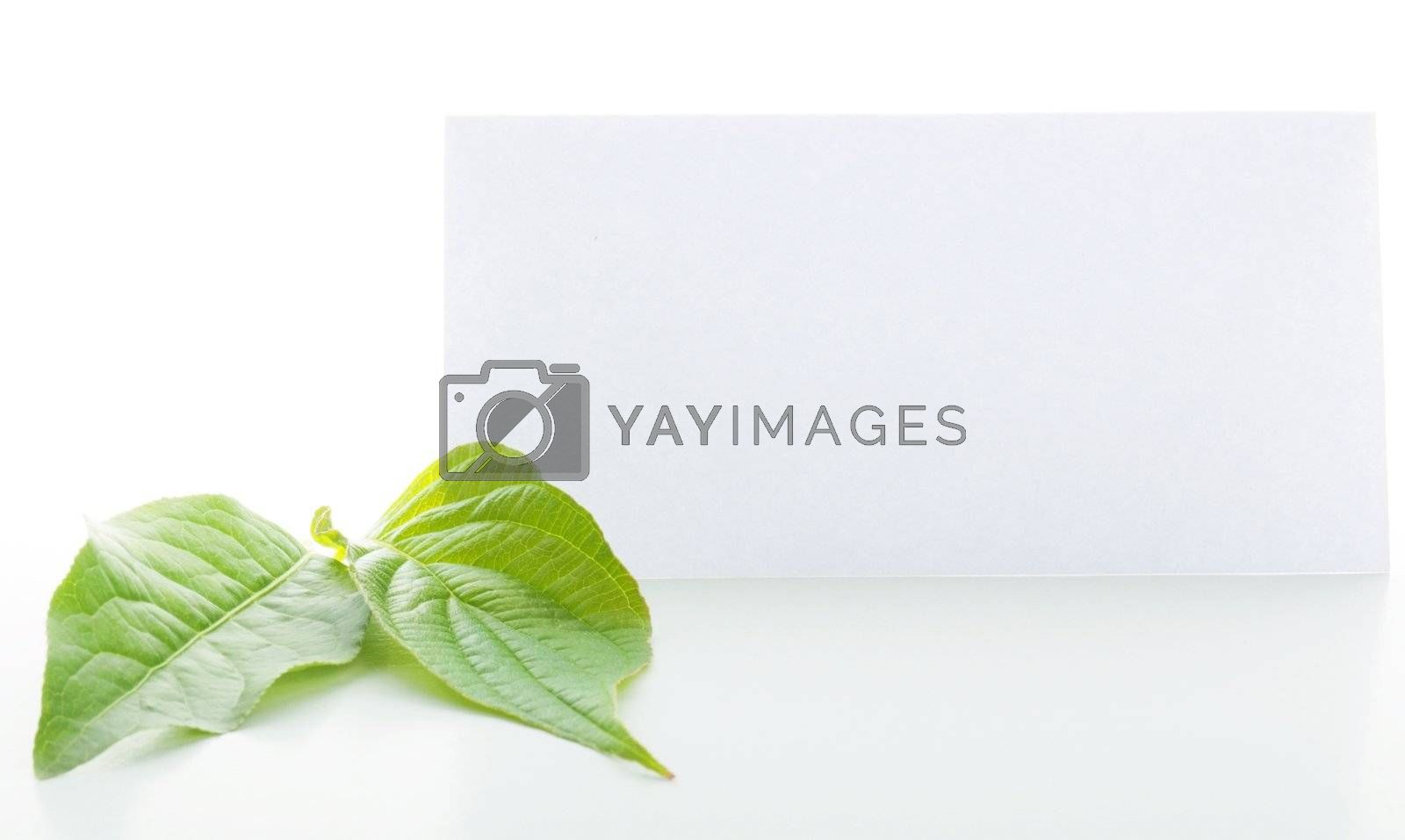 blank paper with copyspace and green leaves