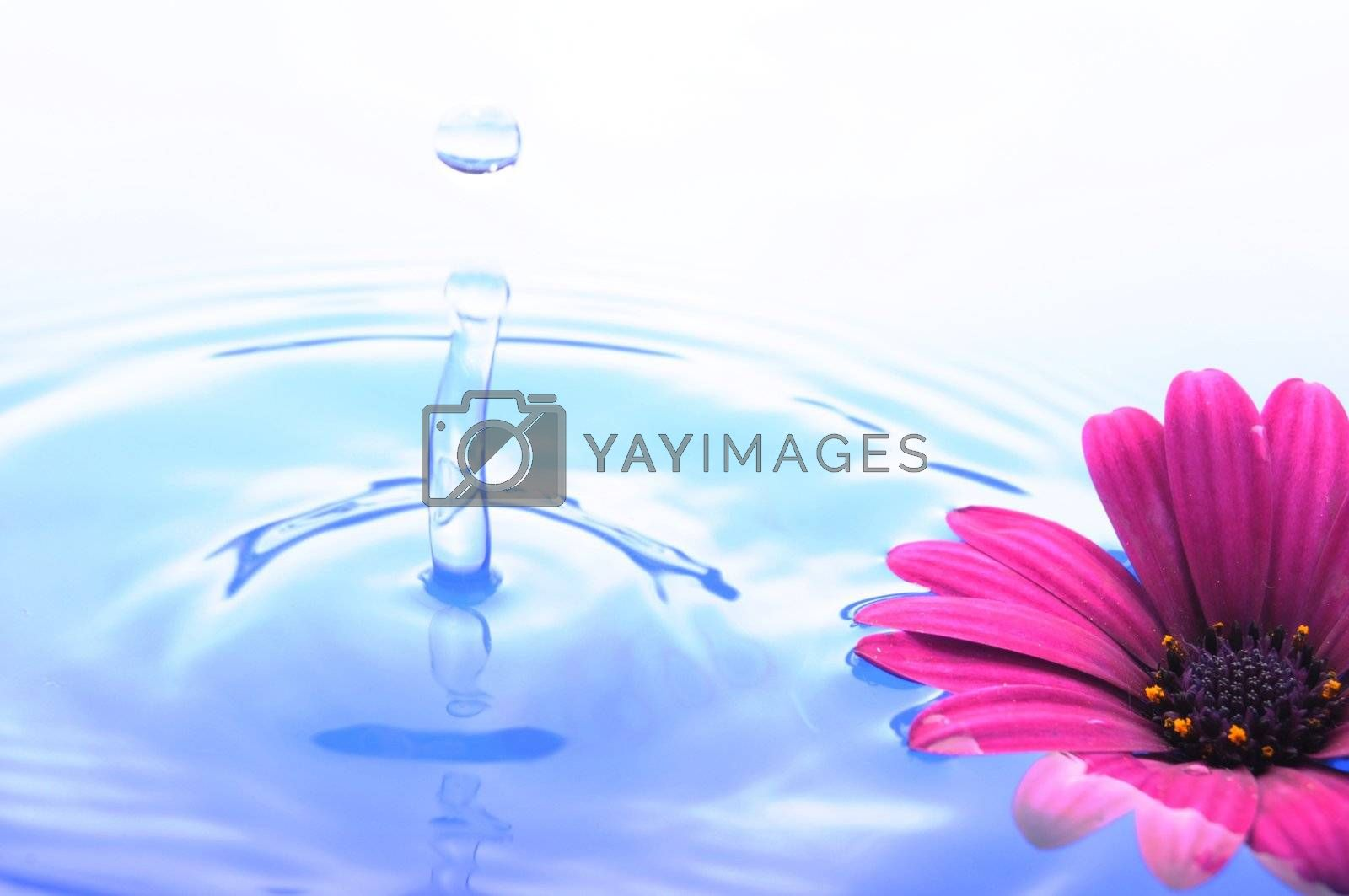 water drop and flower showing spa or zen concept