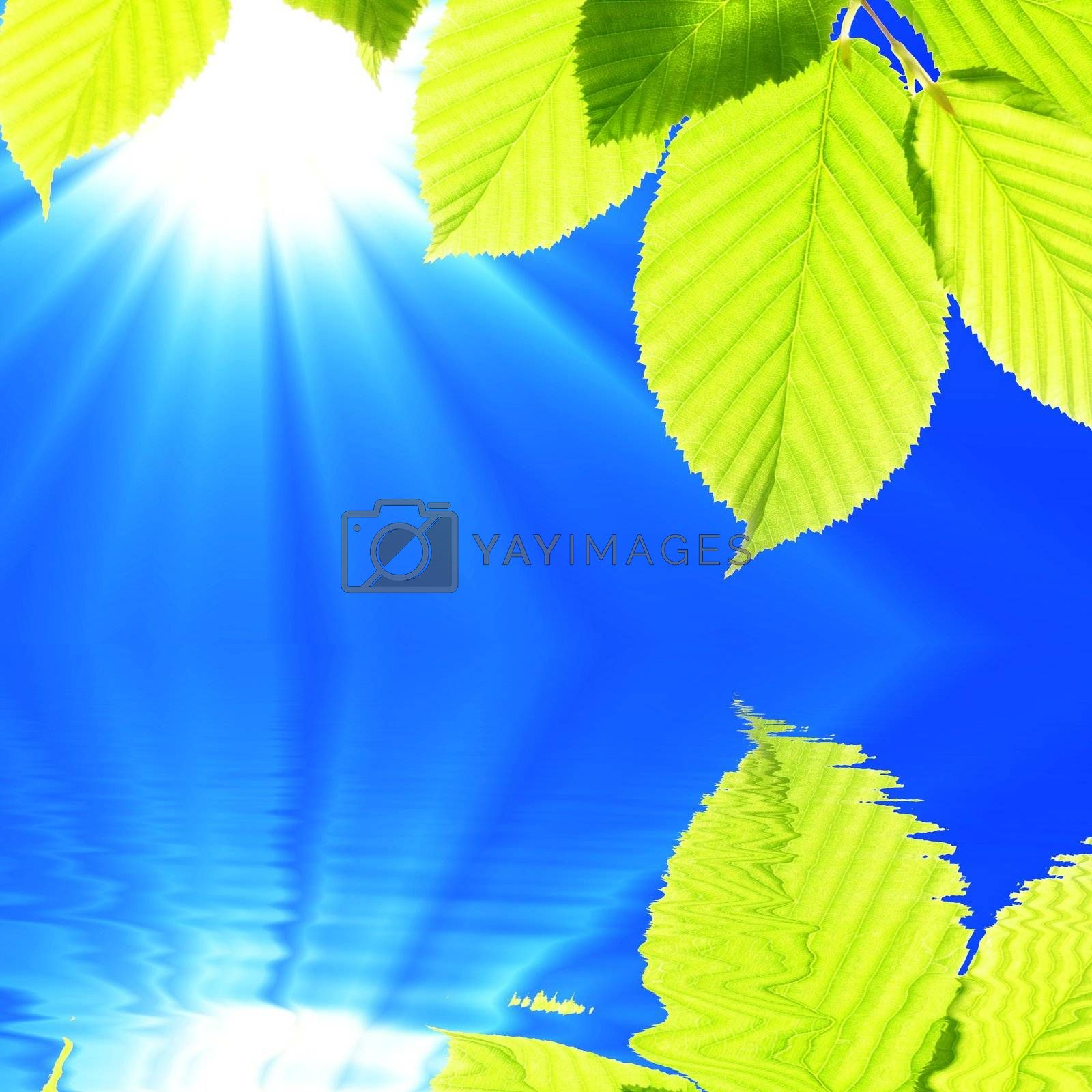 summer spring or ecology concept with green leaves and water