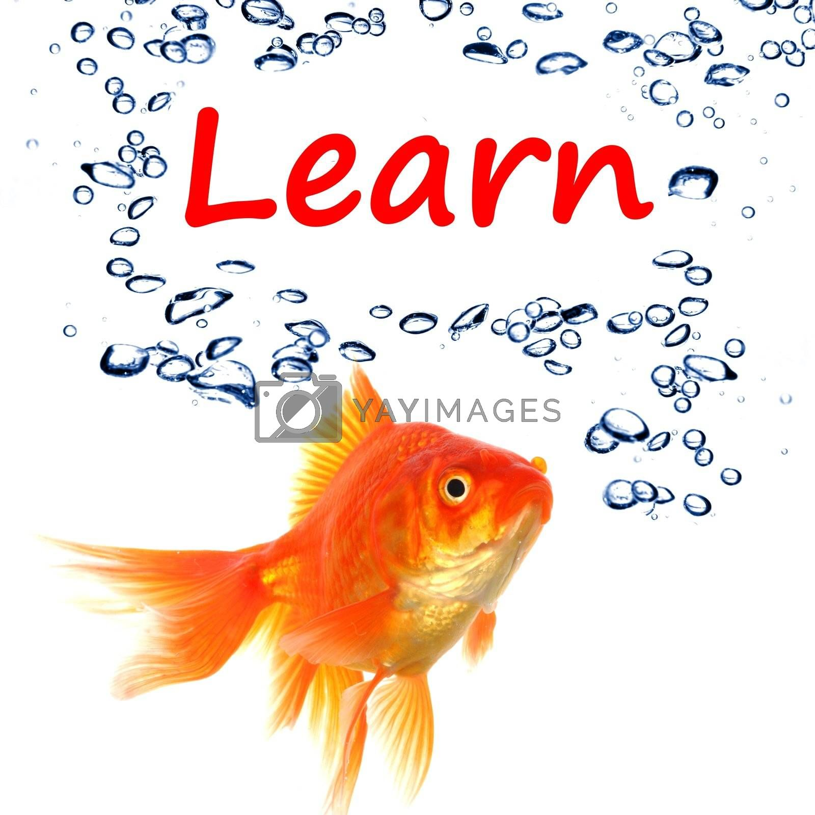 learn word with goldfish showing education concept in white background