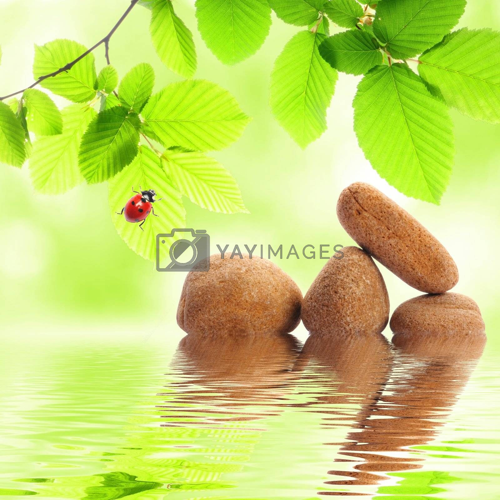 zen stones and green summer leaves with water reflection