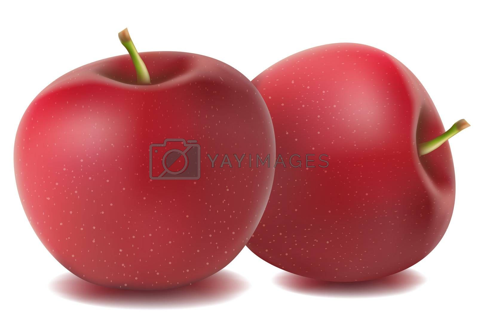 illustration of apples on white background