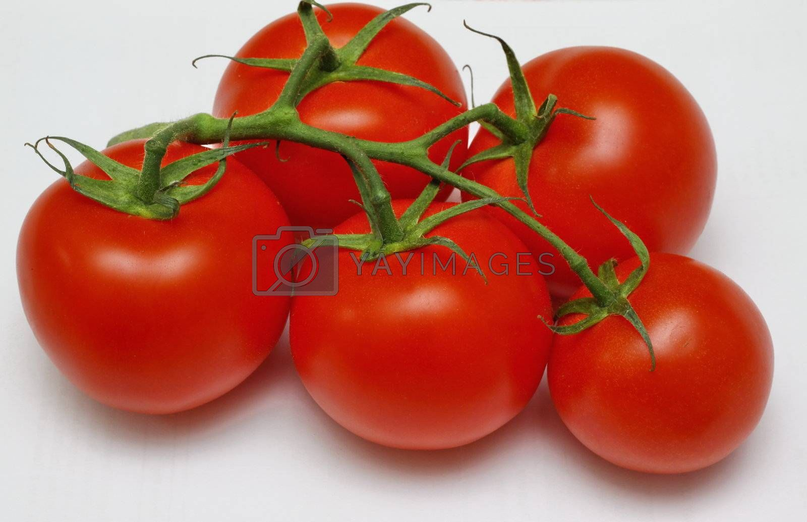 large fresh ripe red tomatoes still on the vine