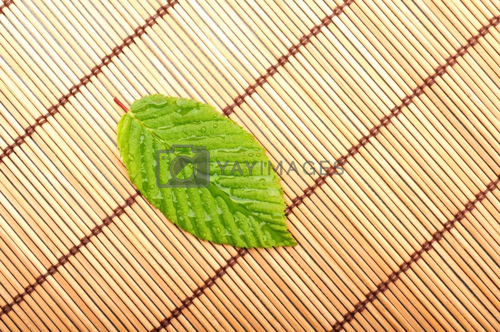 leaf showing spa wellness or zen concept with copyspace
