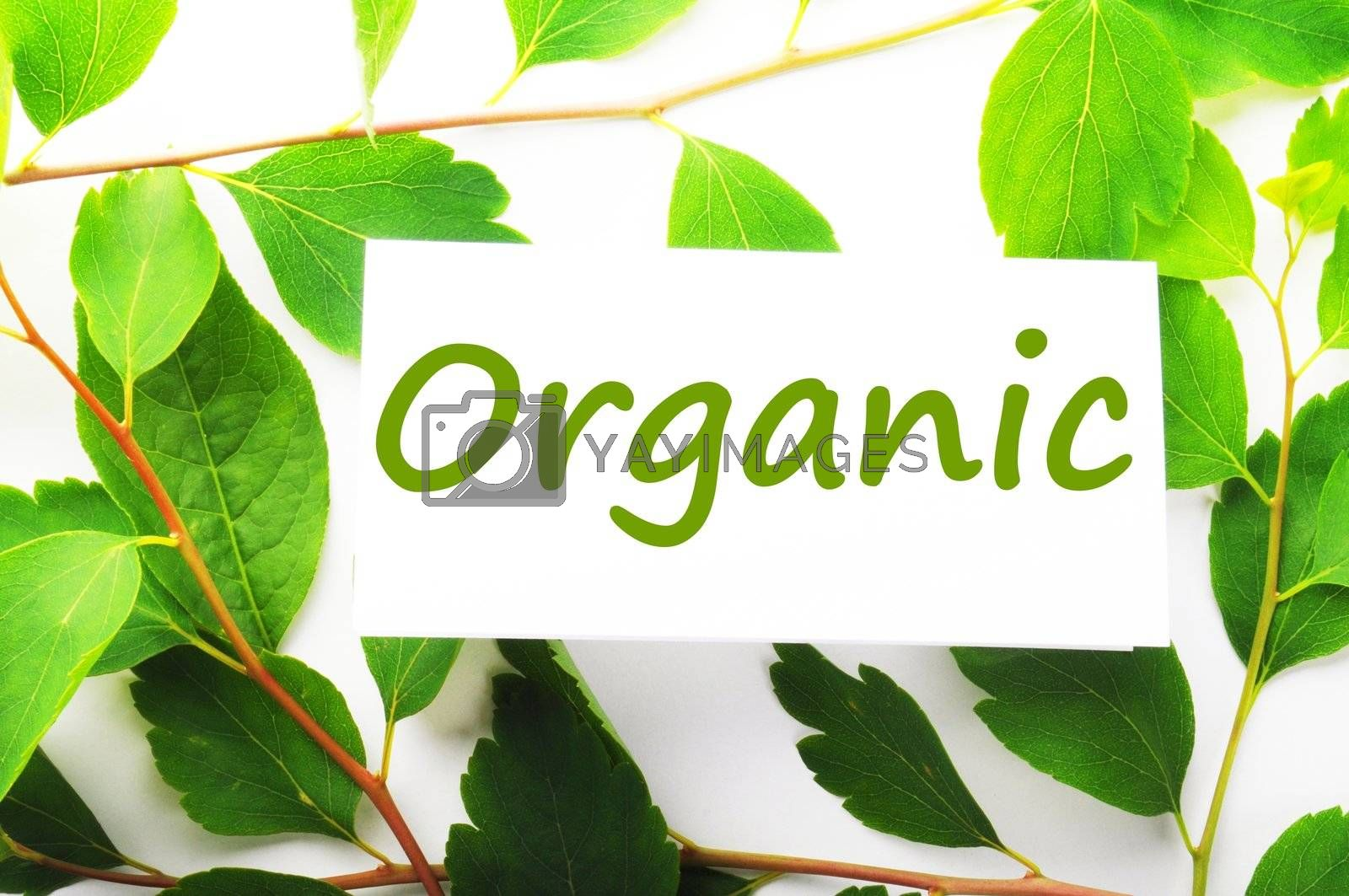organic concept with word on nature still life