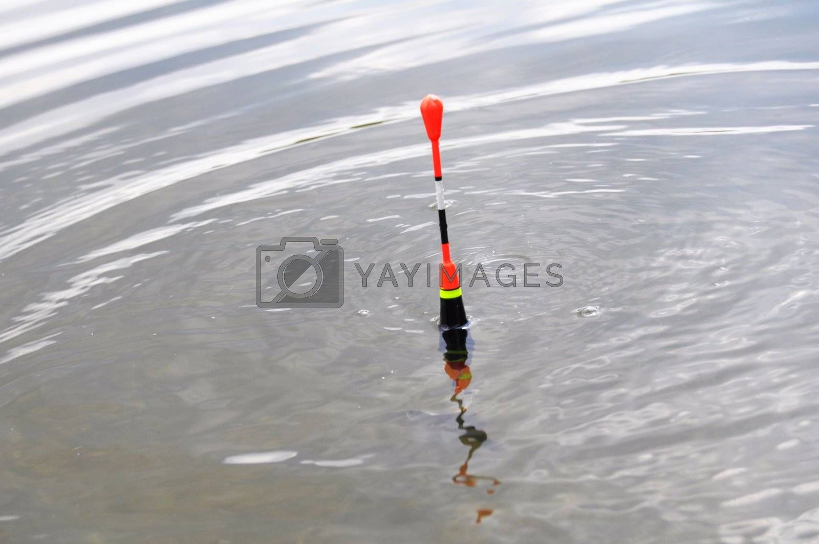 bobber or fishing float in water showing success concept