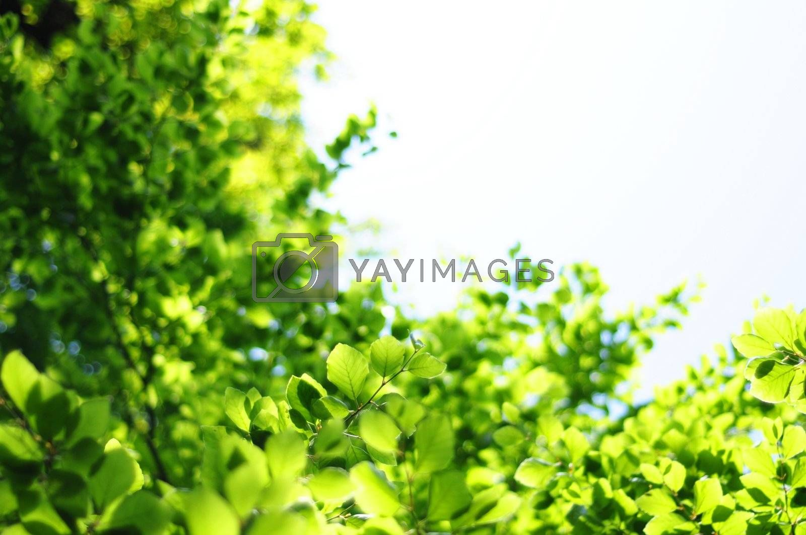 green summer leaves and copyspace showing nature concept
