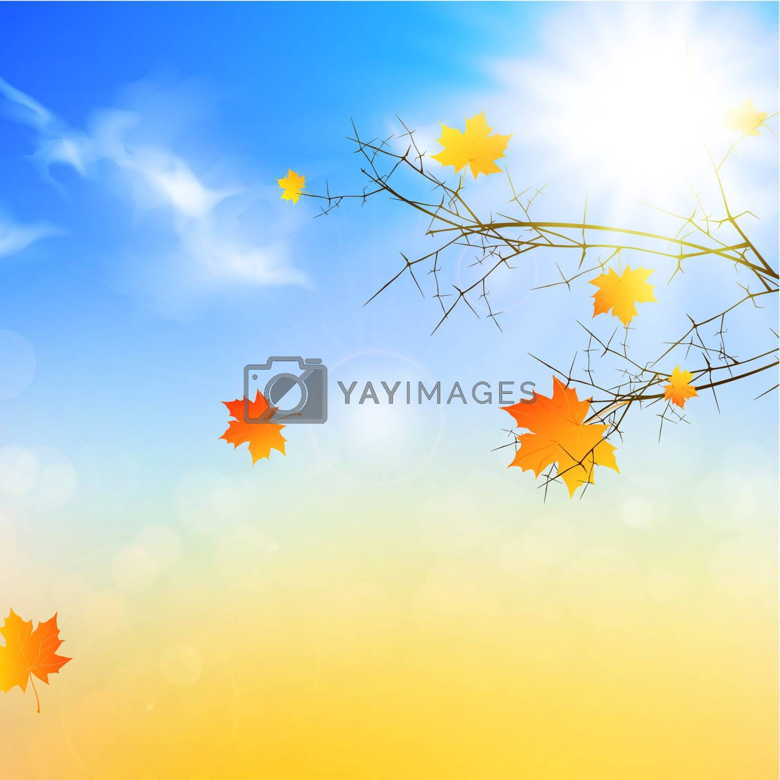 autumn background with sun at blue sky and orange maple leaves
