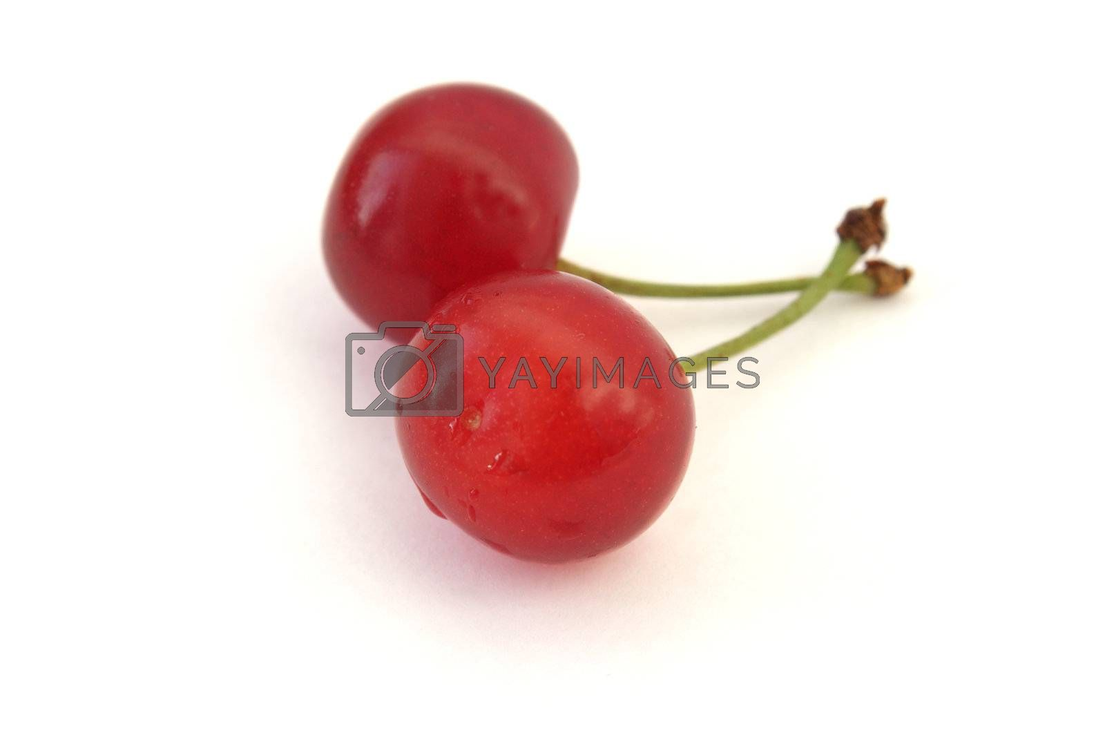 Royalty free image of Two ripe cherries isolated on white by pulen