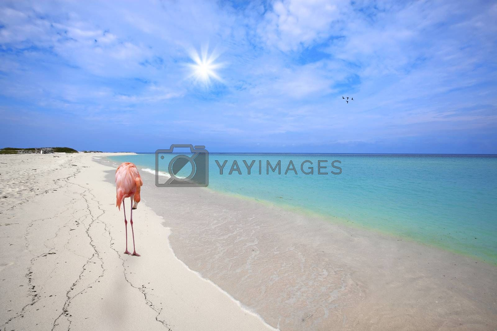 Royalty free image of Flamingo at the beach by kjorgen