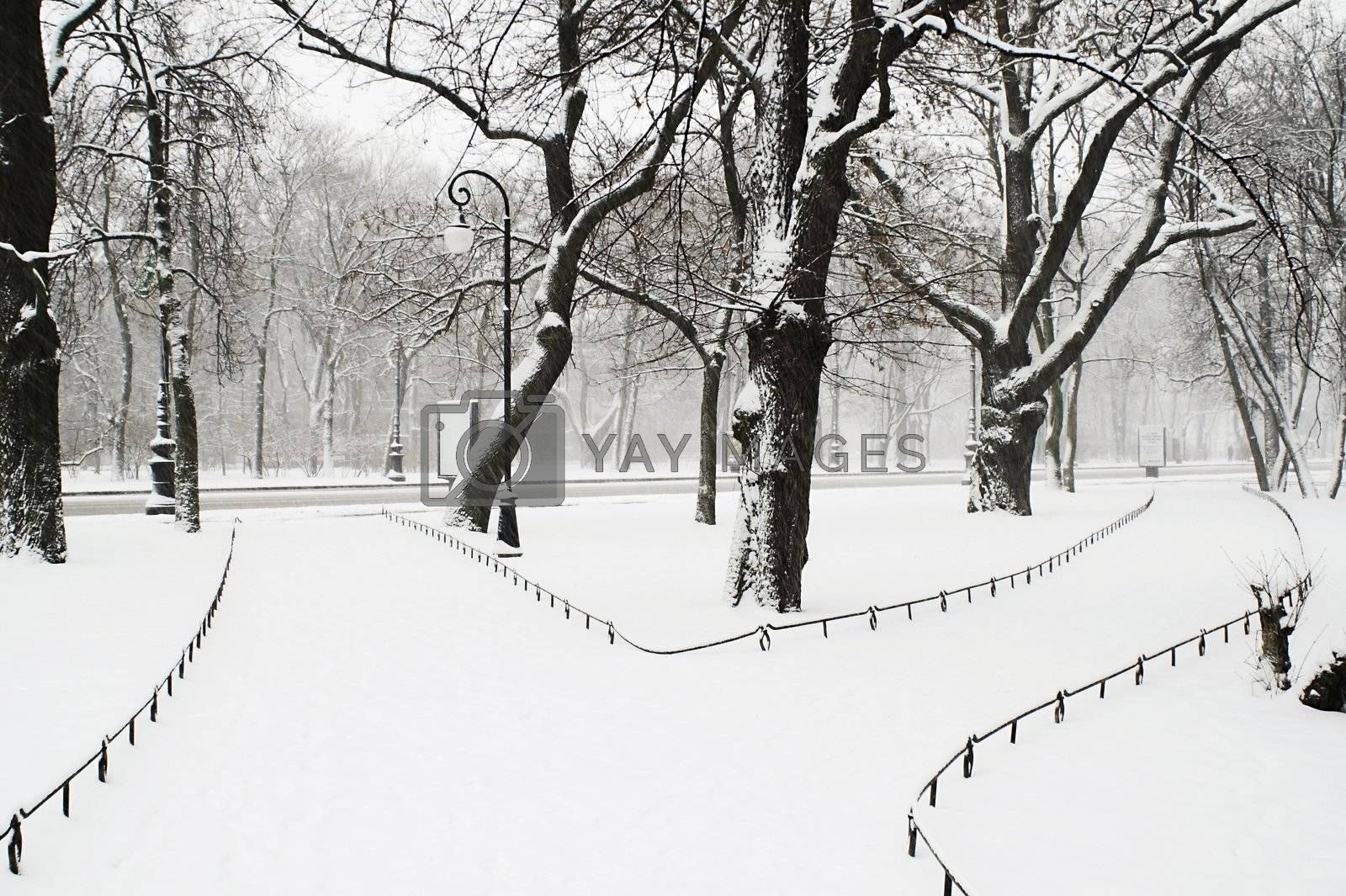 Alexandriyski park at snowfall in Saint Petersburg, Russia.