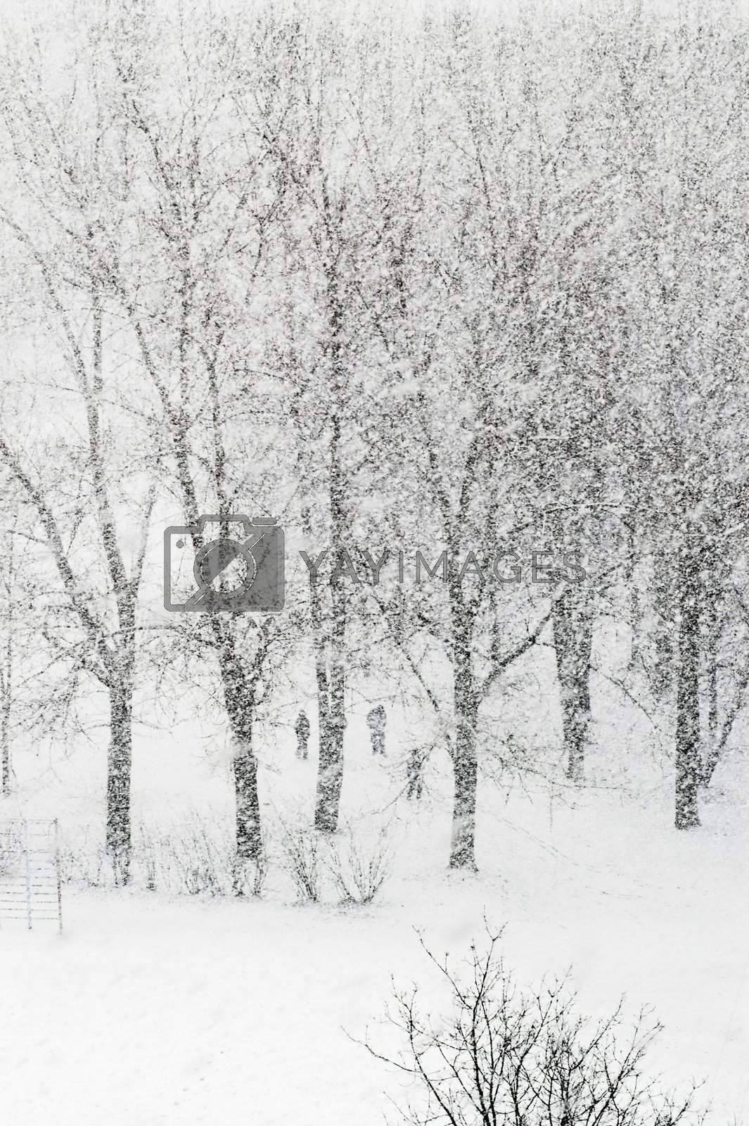 Heavy snowfalling  by simfan