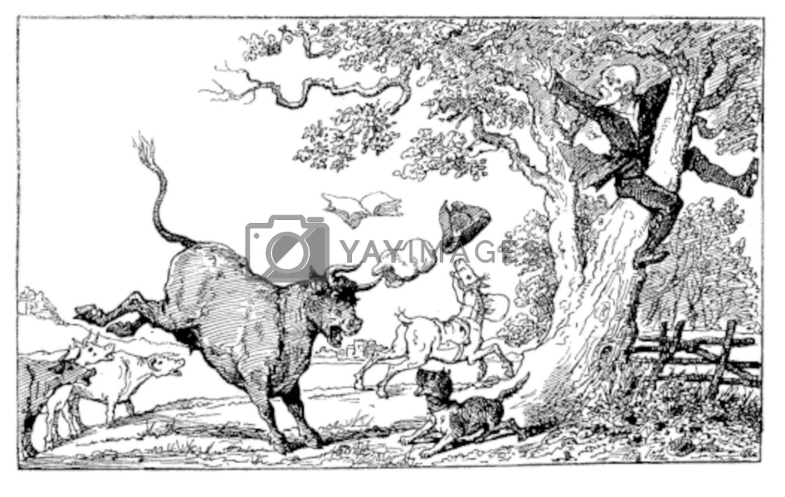 Old engraved illustration of Dr. Syntax being chased by a bull,1874. Created  by Thomas Rowlandson. Le Magasin Pittoresque - 1874.