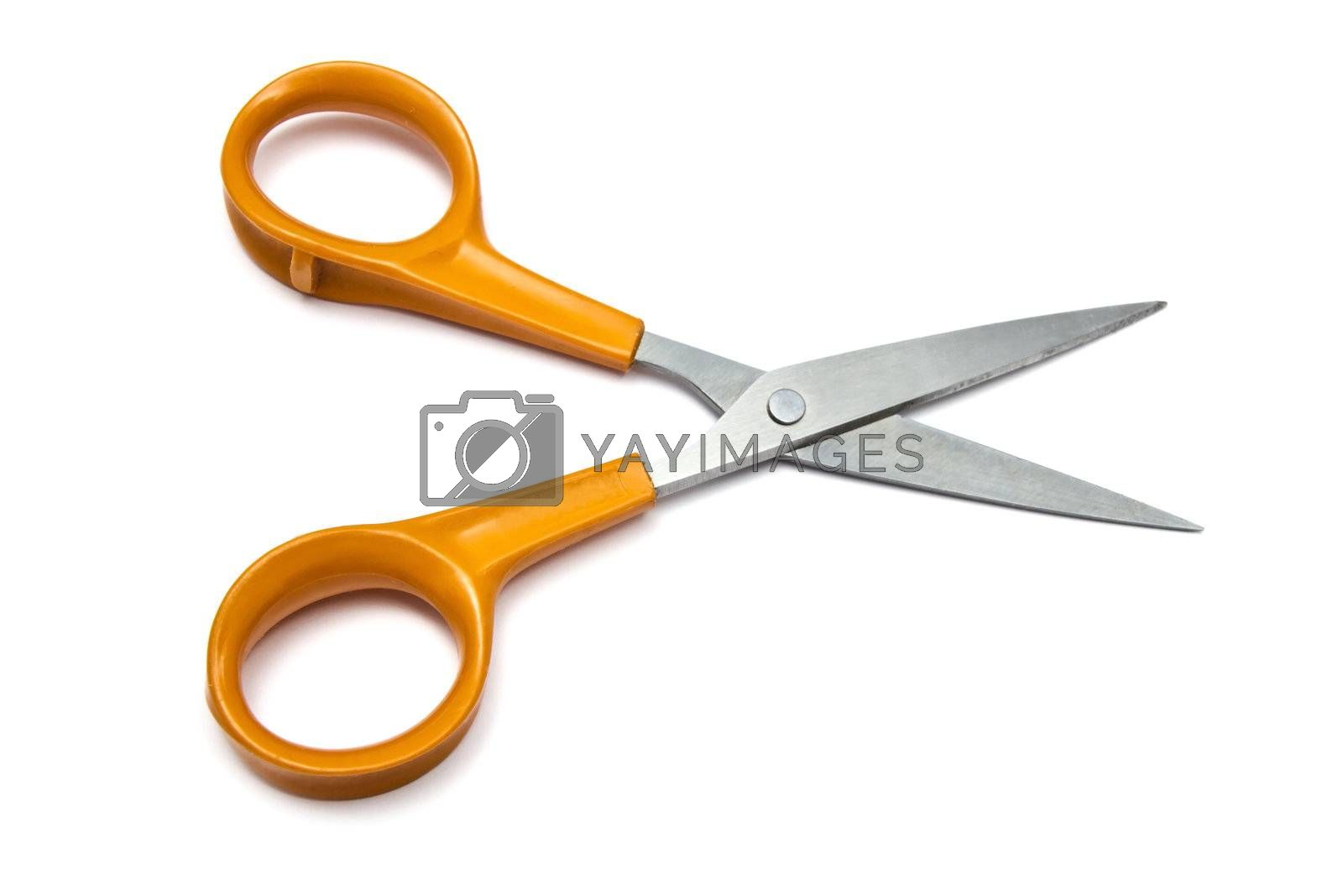Handled scissors  by ibphoto