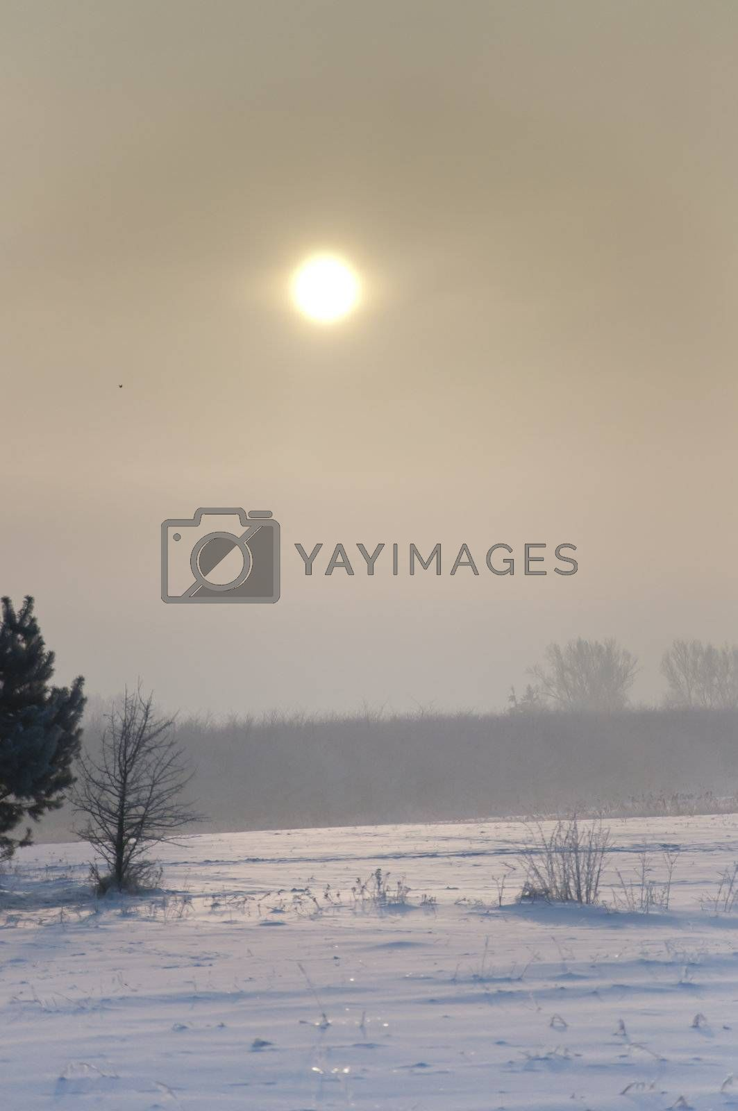 an image of winter scenery