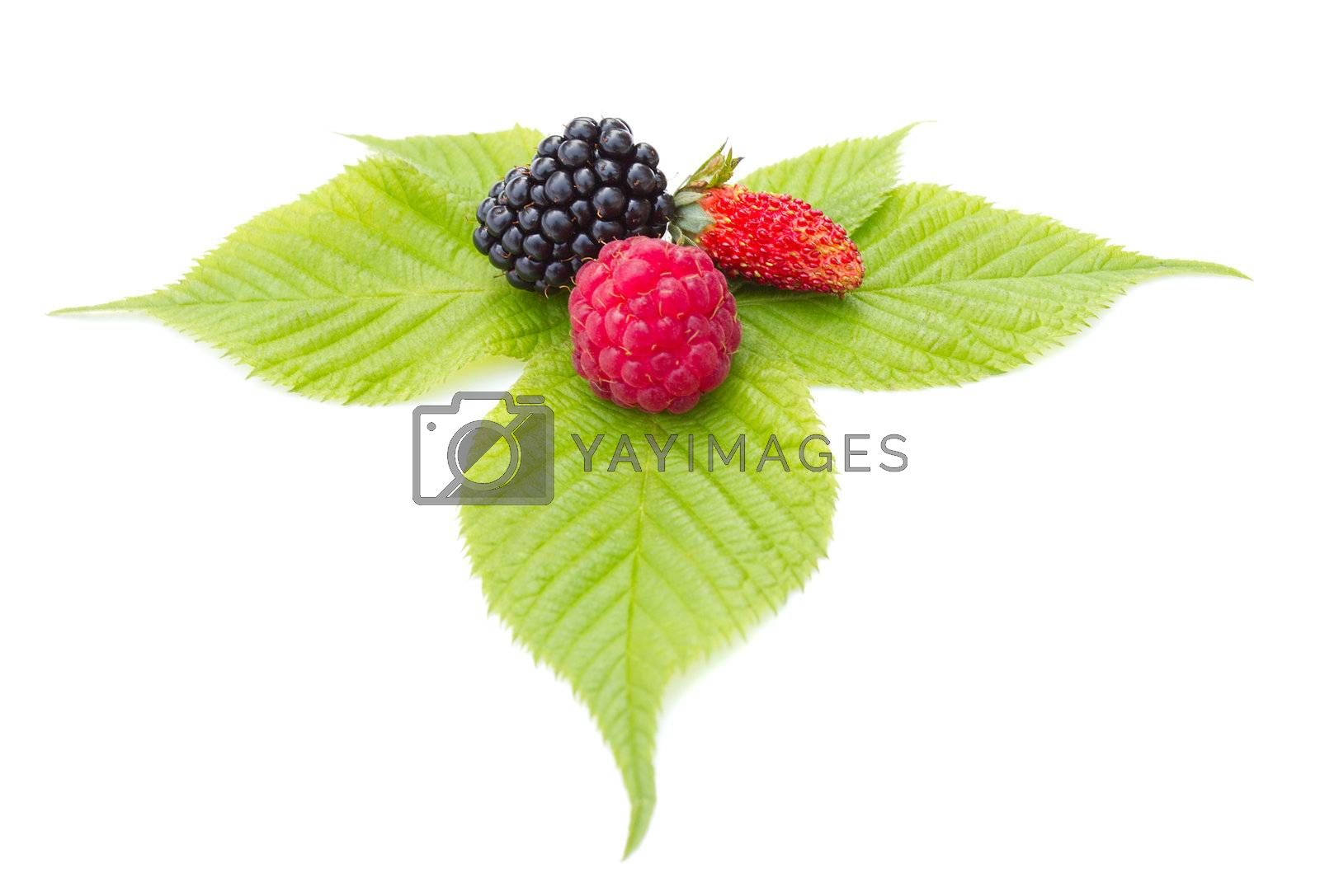 strawberry, blackberry and raspberry on leaf, isolated on white