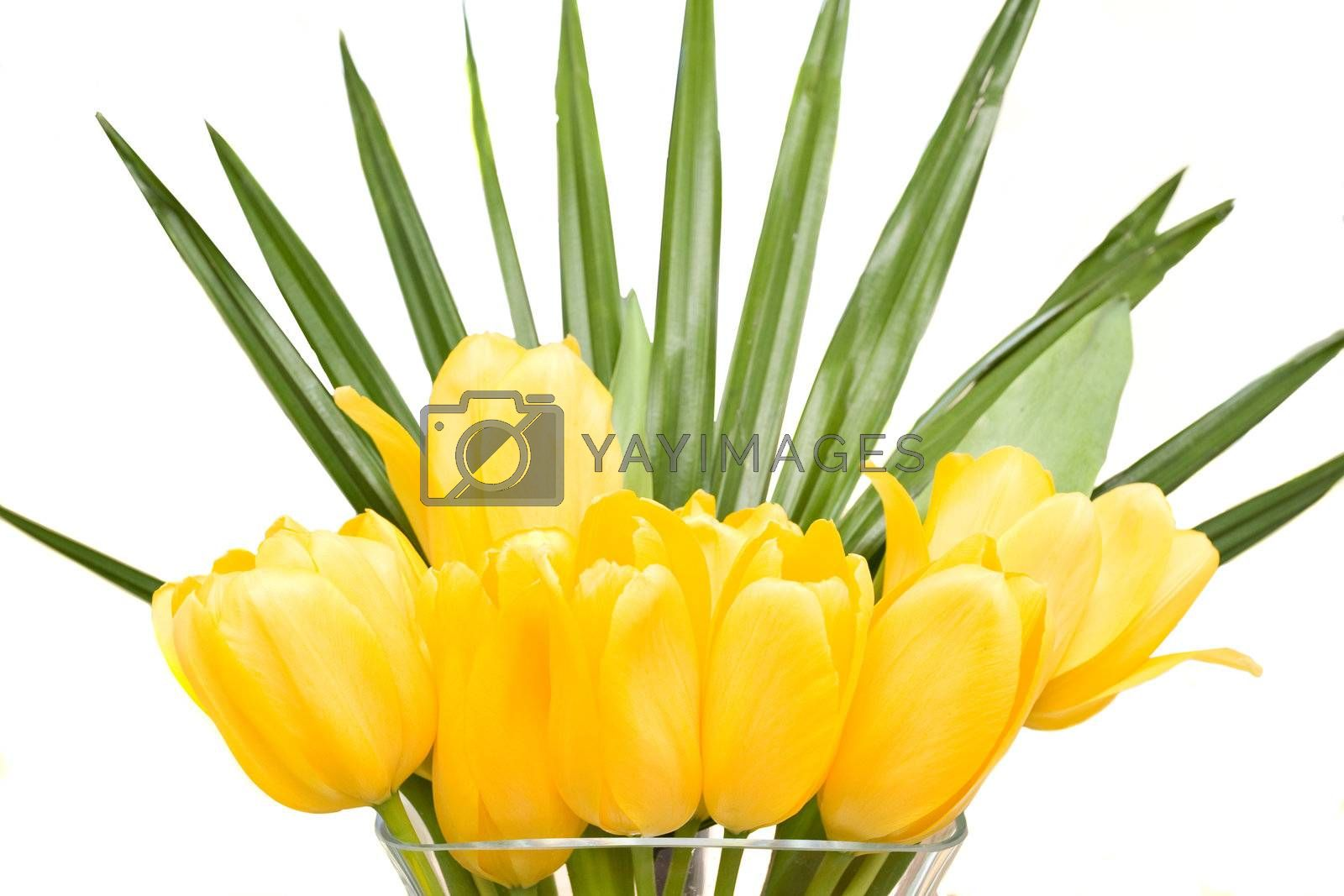 Tulips by jrstock