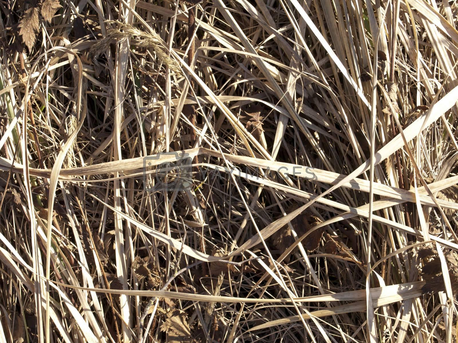 A grass texture