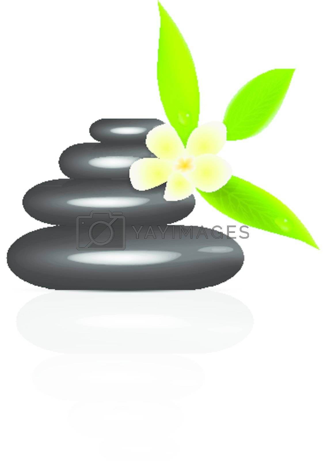 Vector spa stones and frangipani isolated on white background