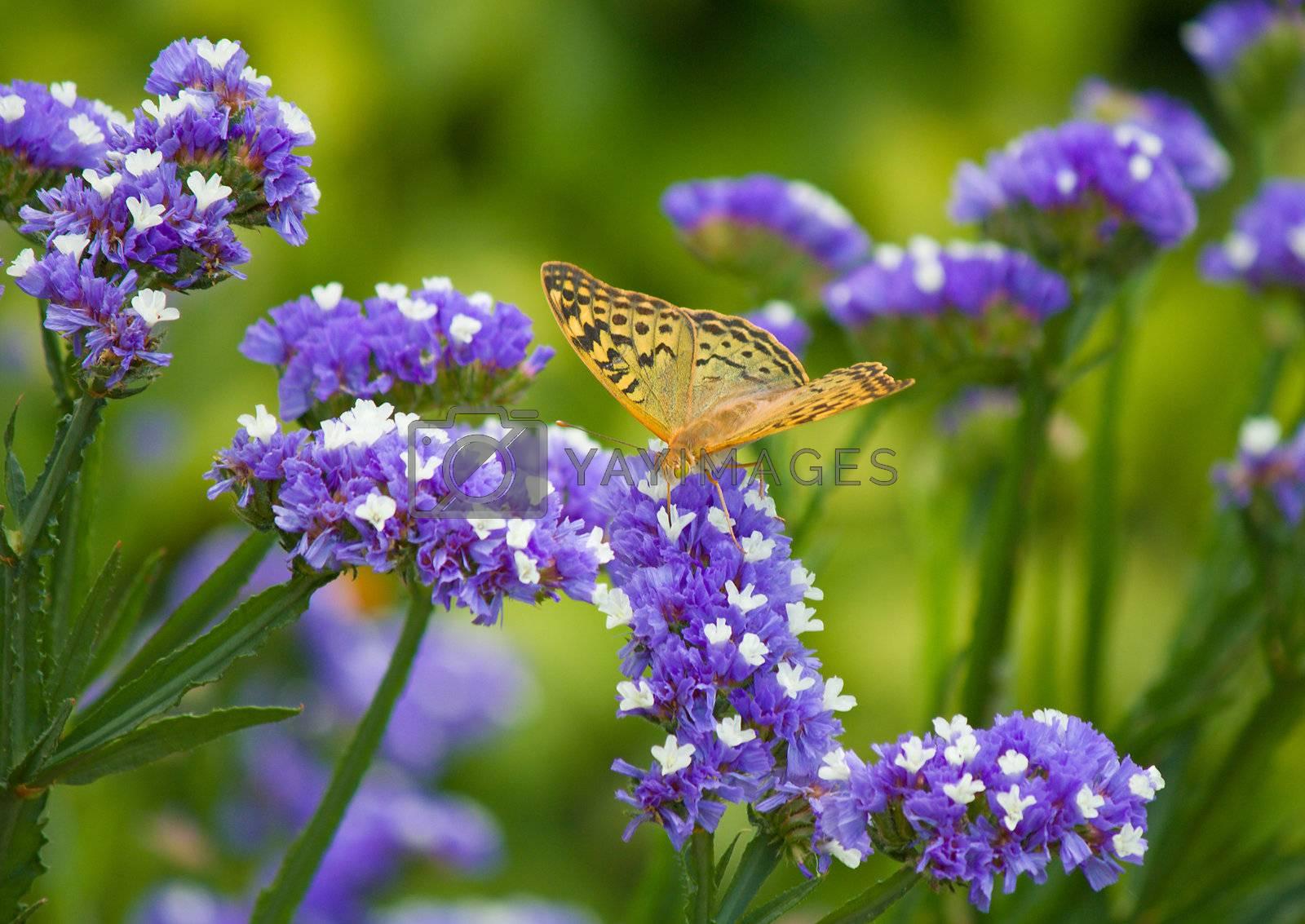 butterfly on flower by Alekcey