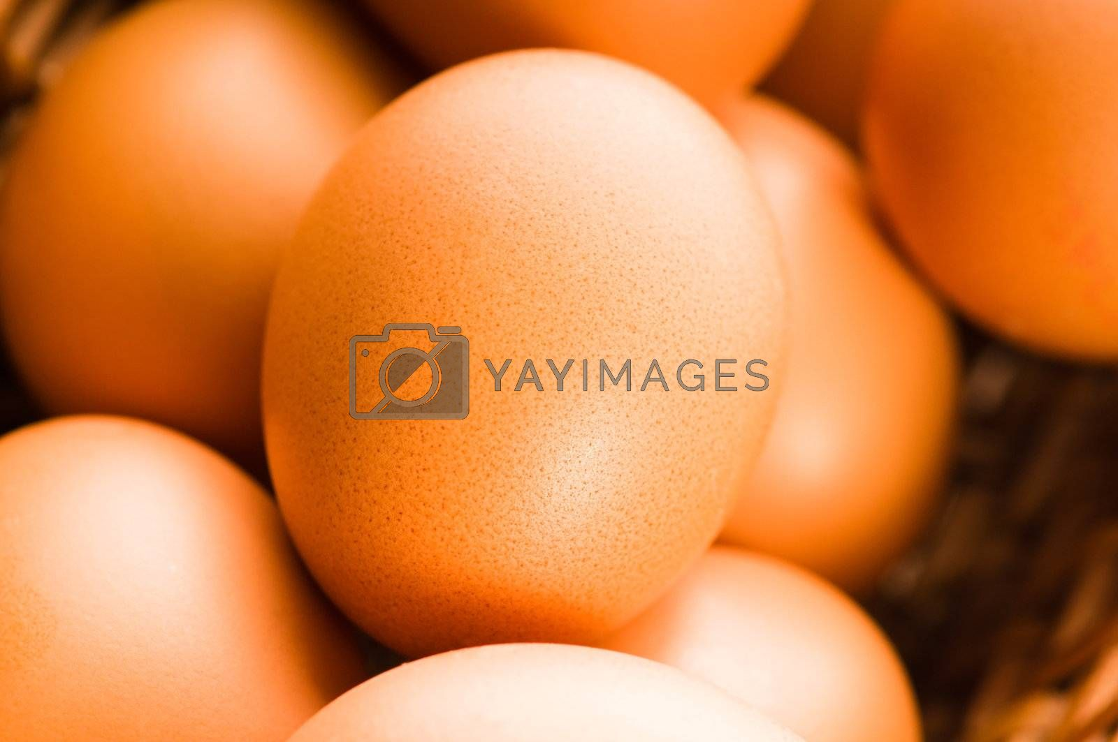 Fresh brown cage free eggs