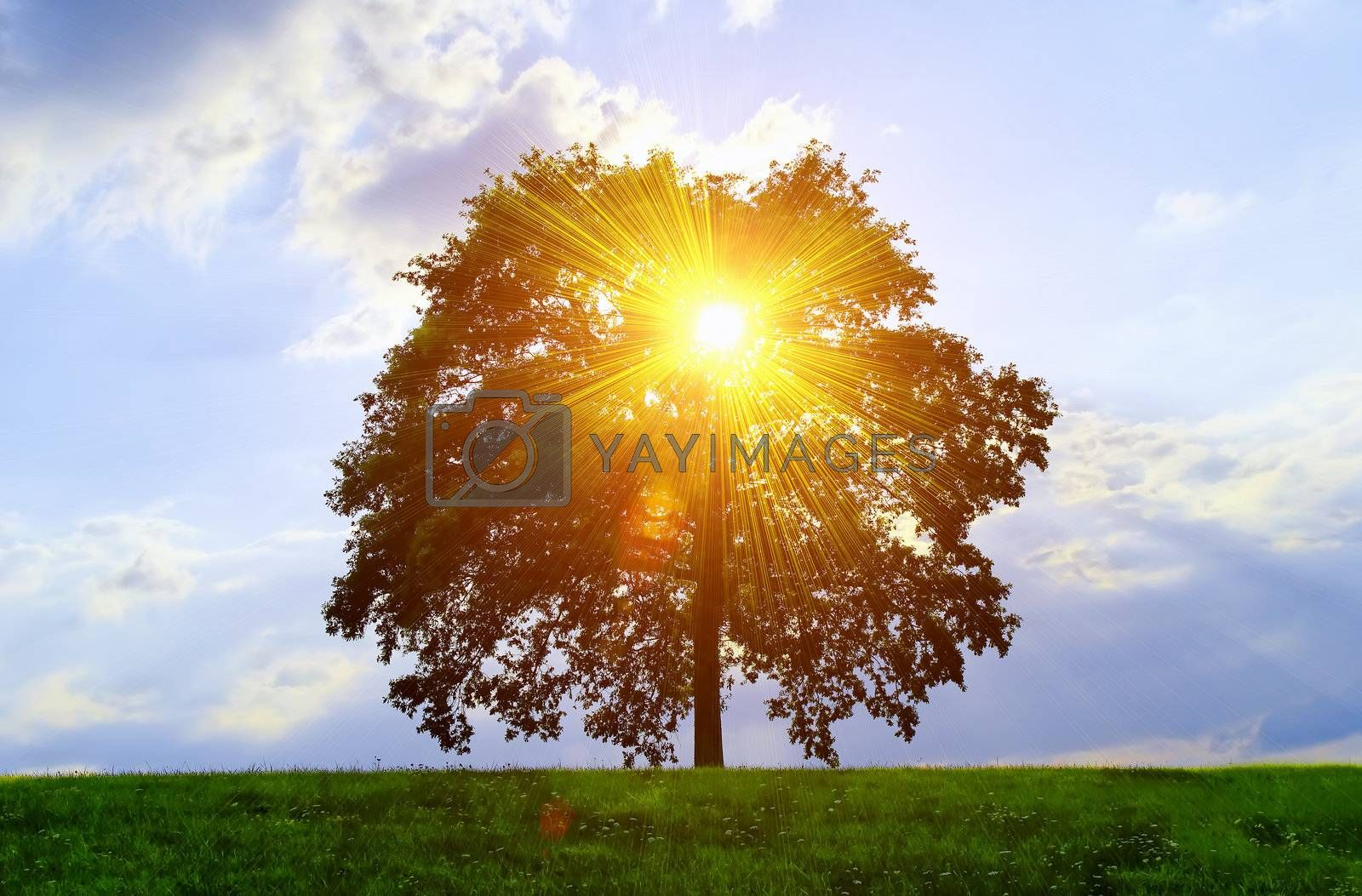 An isolated tree with sunlight effect.