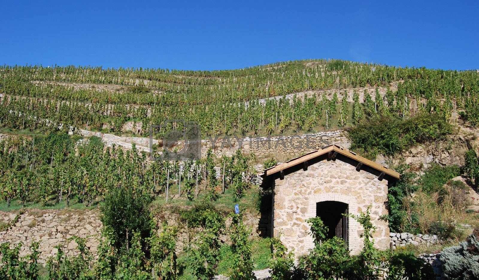 Hermitage hill in Rhone valley