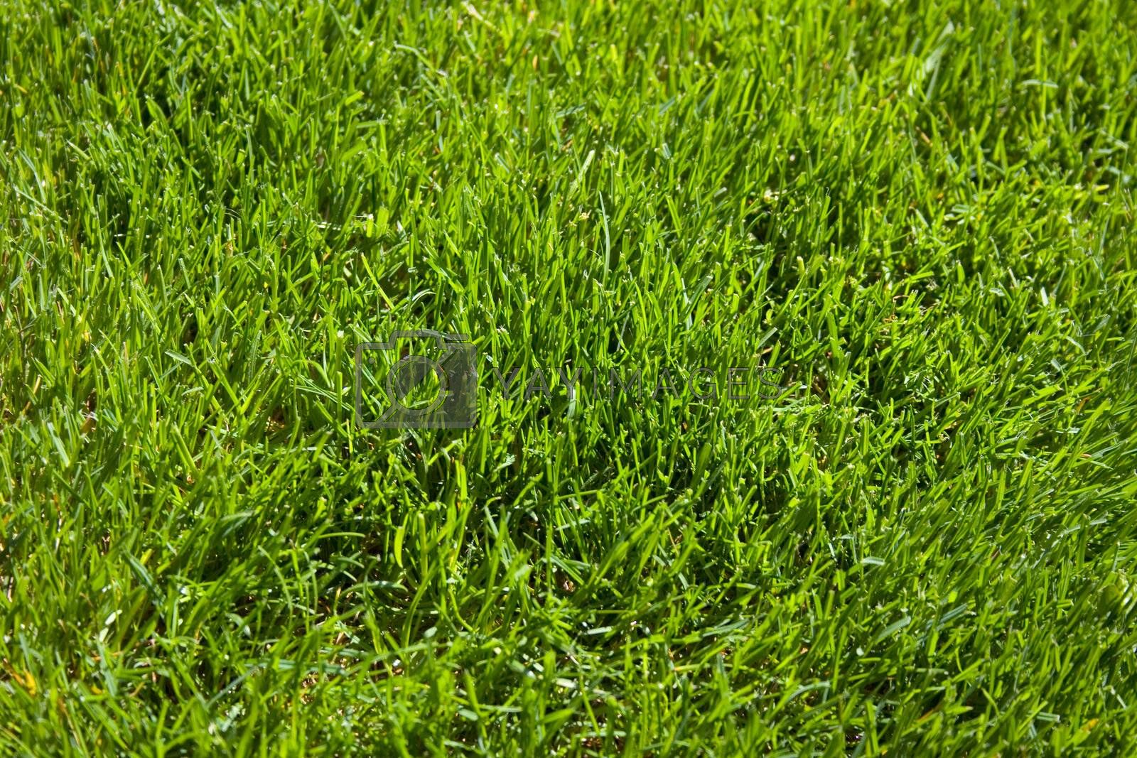 A close-up of a patch of grass to be used as a background texture.