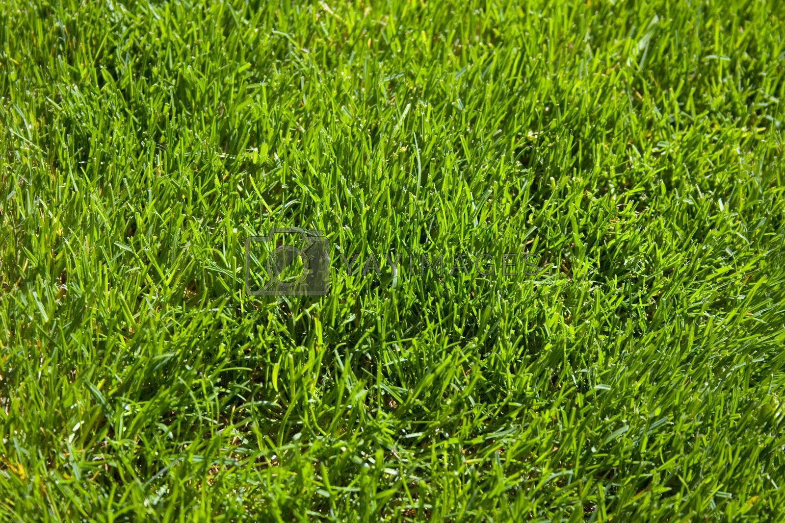Grass Texture by jclardy