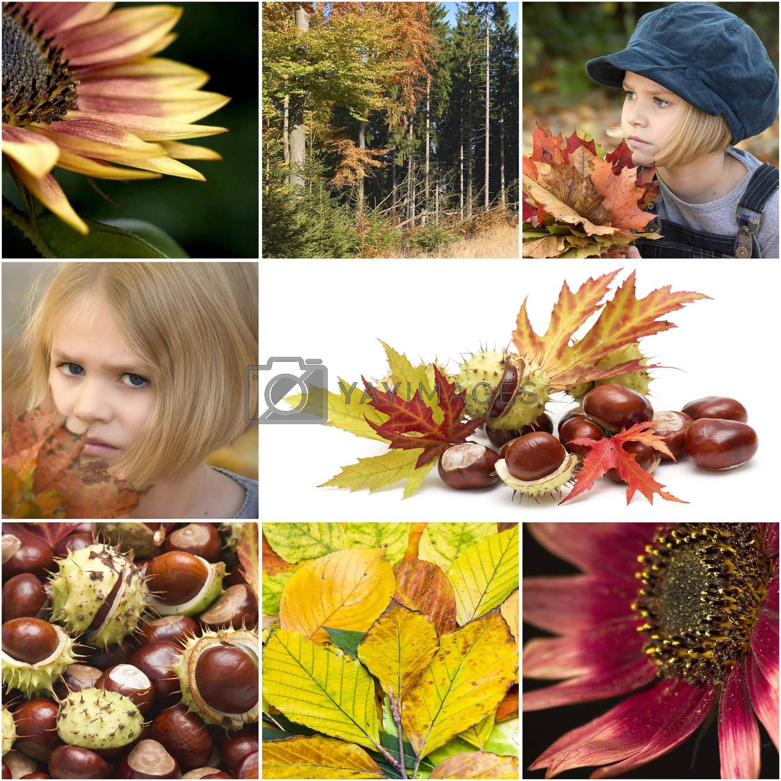 Autumn collage with different autumn pictures