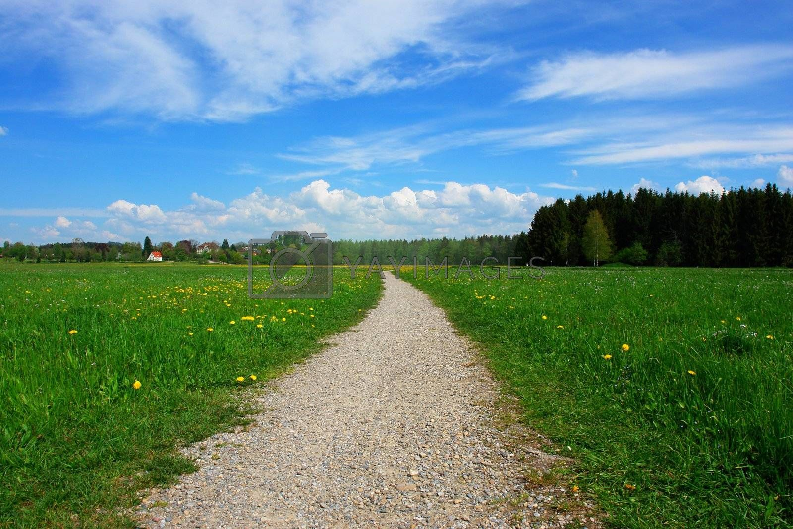 a path through a summer landscape on a sunny day