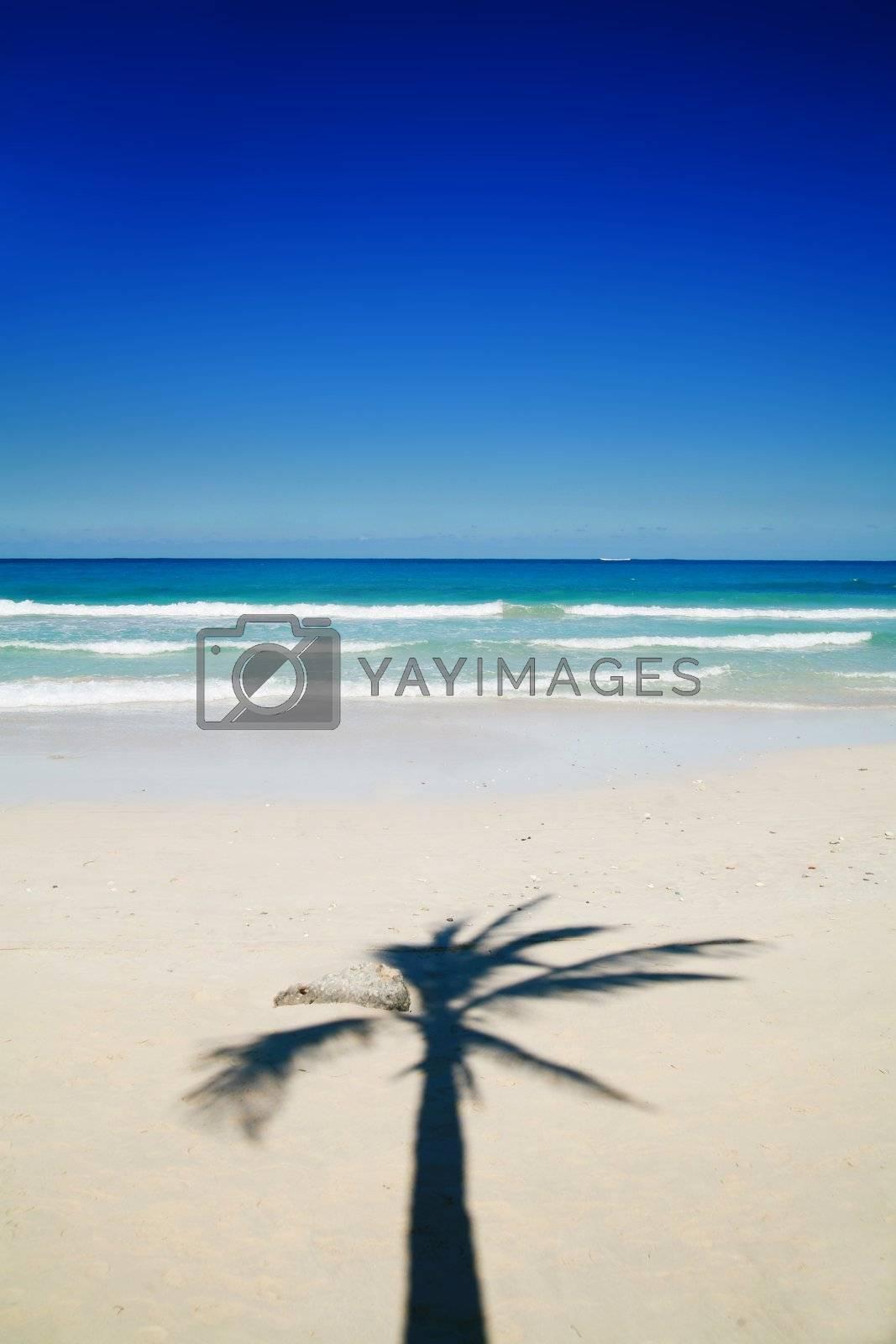 a beautiful tropical island scene in cuba