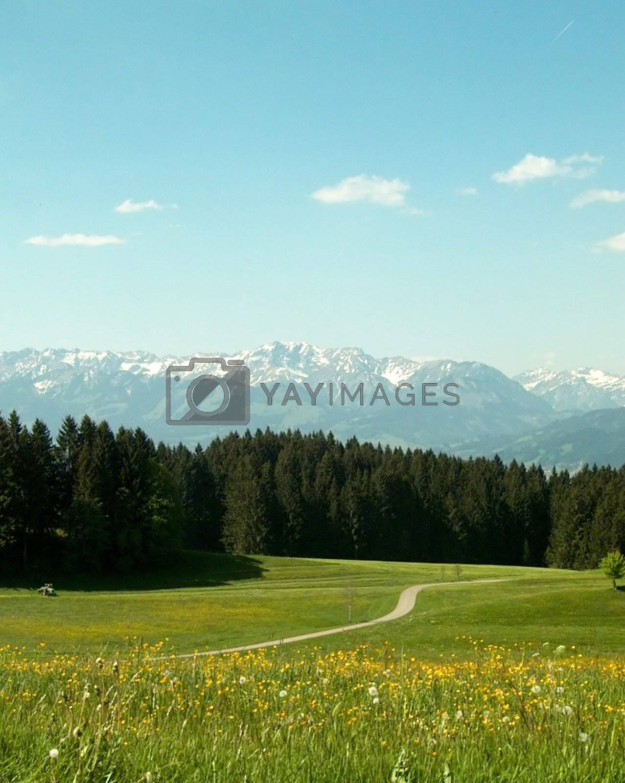 Royalty free image of Spring by yucas