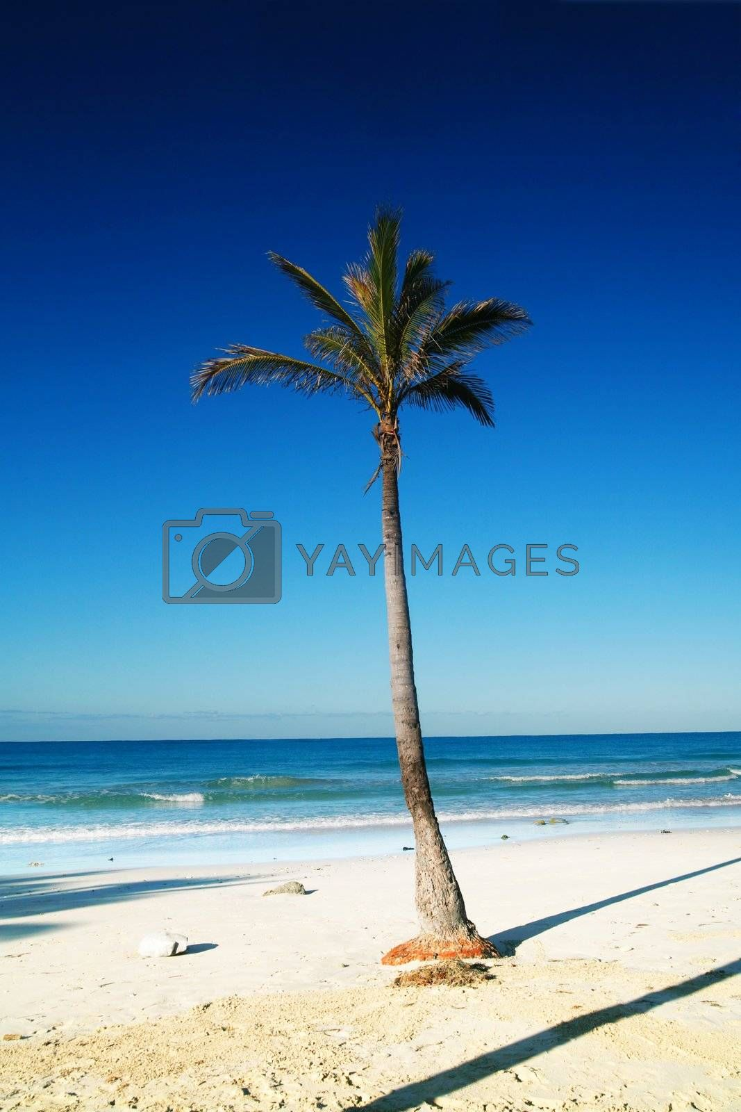 Royalty free image of Tropical Island by yucas