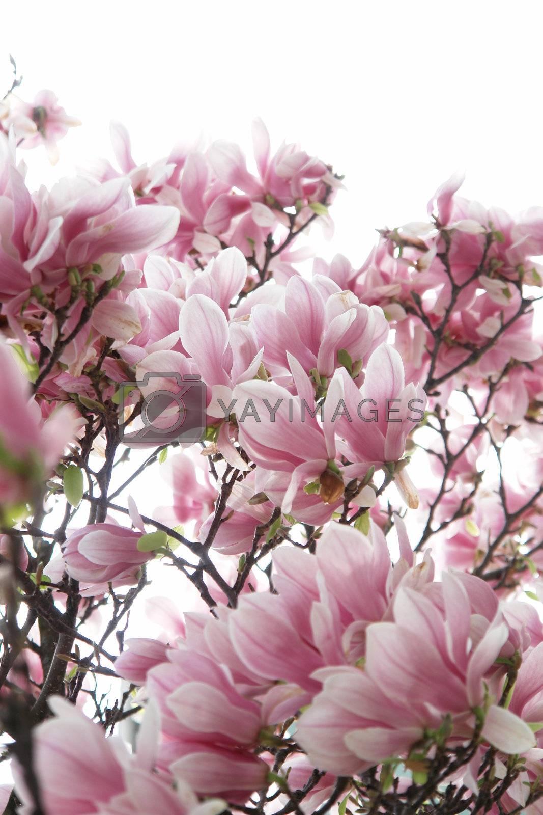 beautiful colorful viivid flowers in bloom