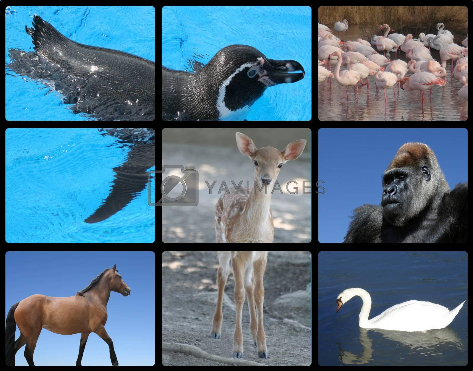 Animals - horse gorilla deer penguin flamingo swan