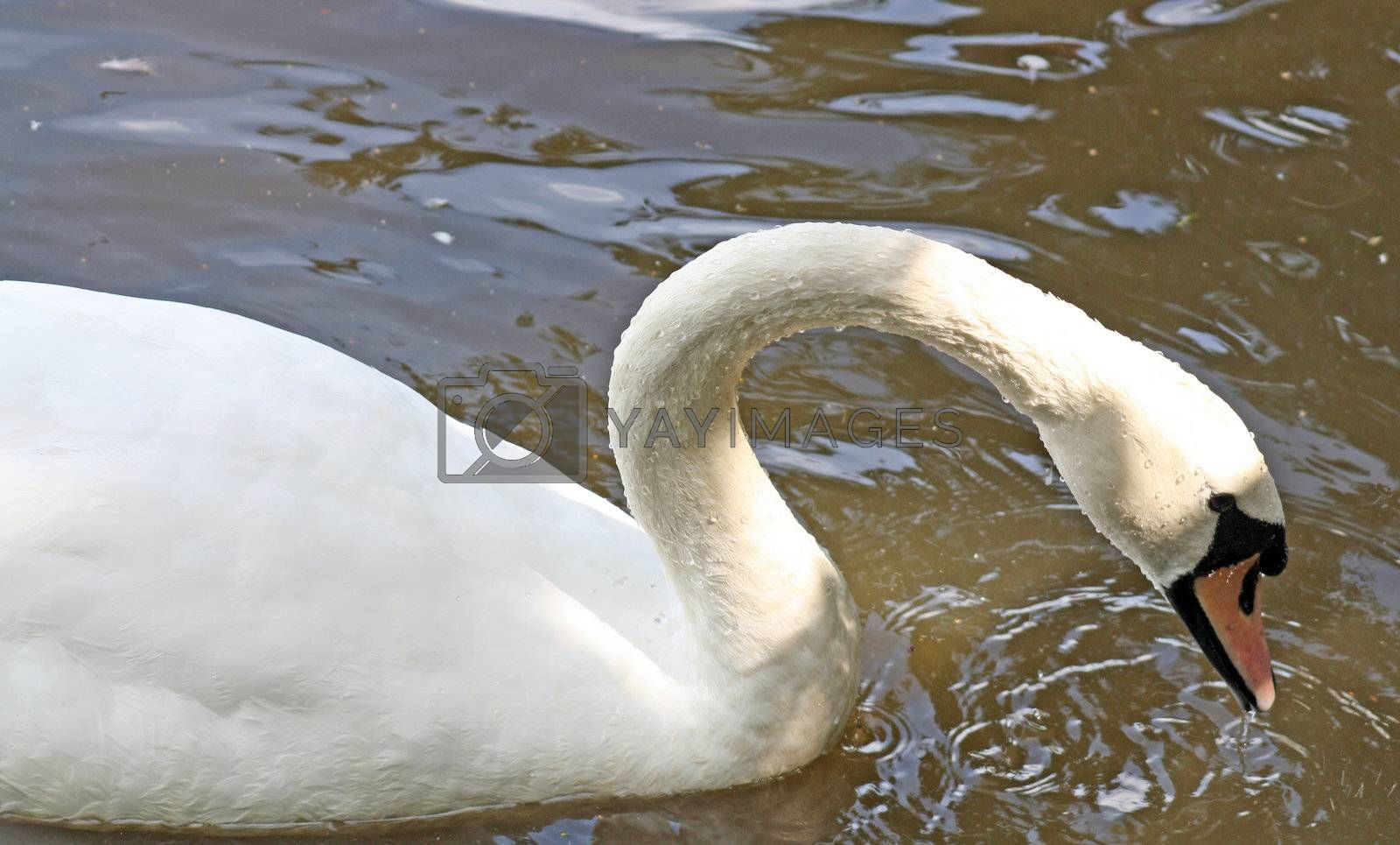 a sawn on the lake