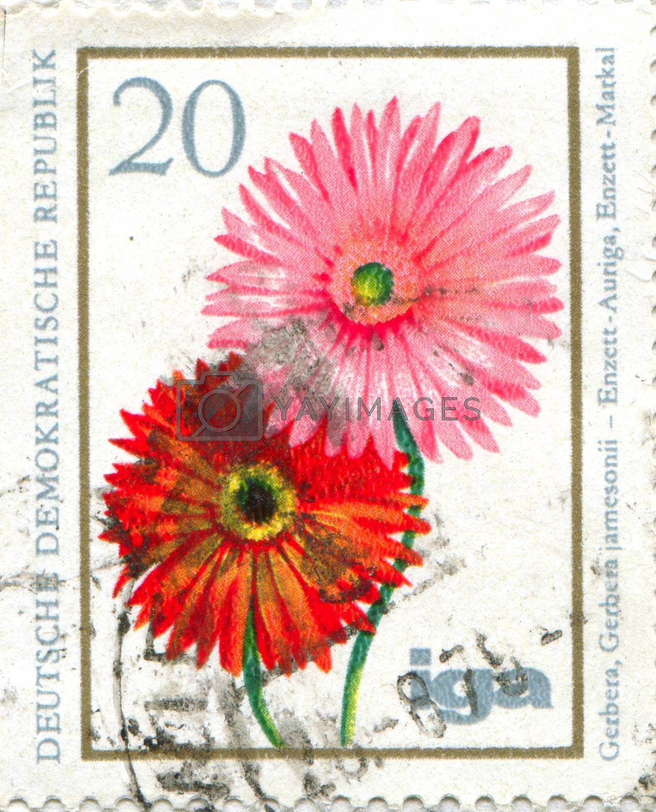 GERMANY - CIRCA 1965: stamp printed by Germany, shows Gerbera, circa 1965