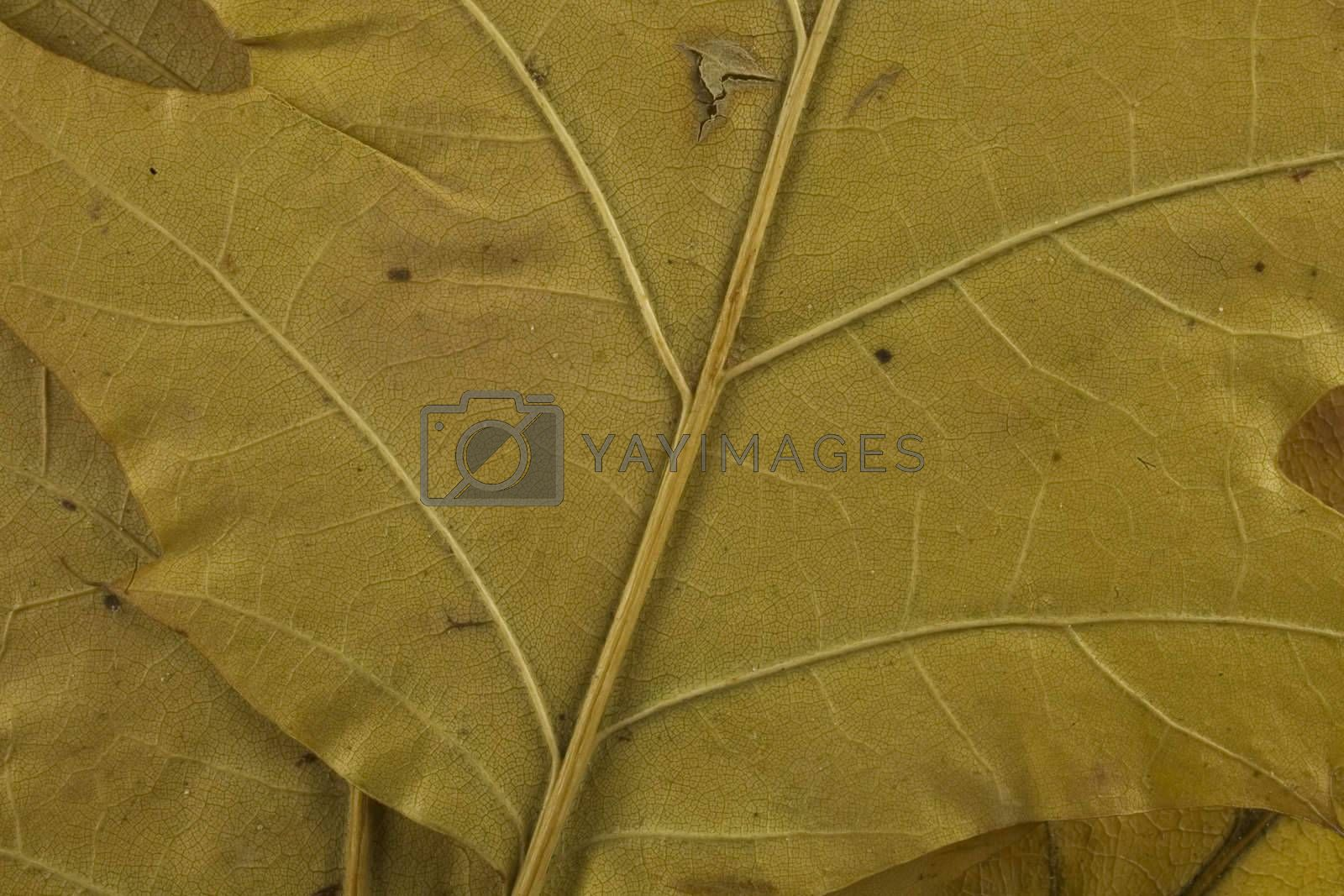 fall, leaf, brown, background, after, rain, autumn, forset, tree, blade, october