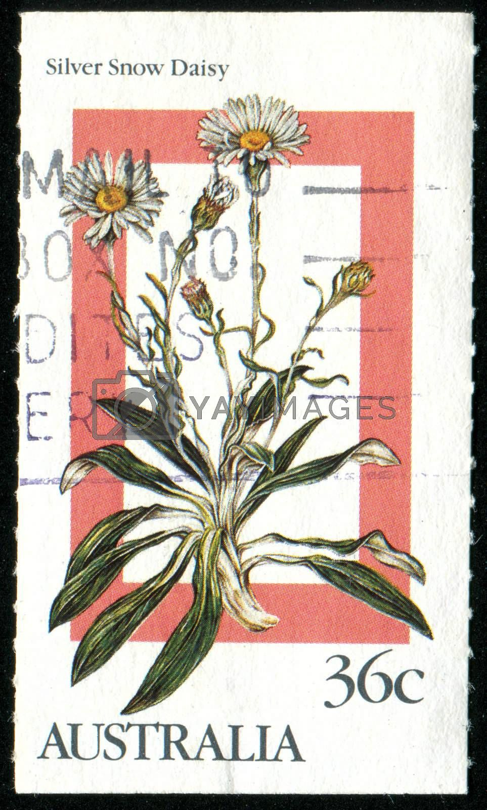 AUSTRALIA - CIRCA 1986: stamp printed by Australia, shows Silver snow daisy, circa 1986