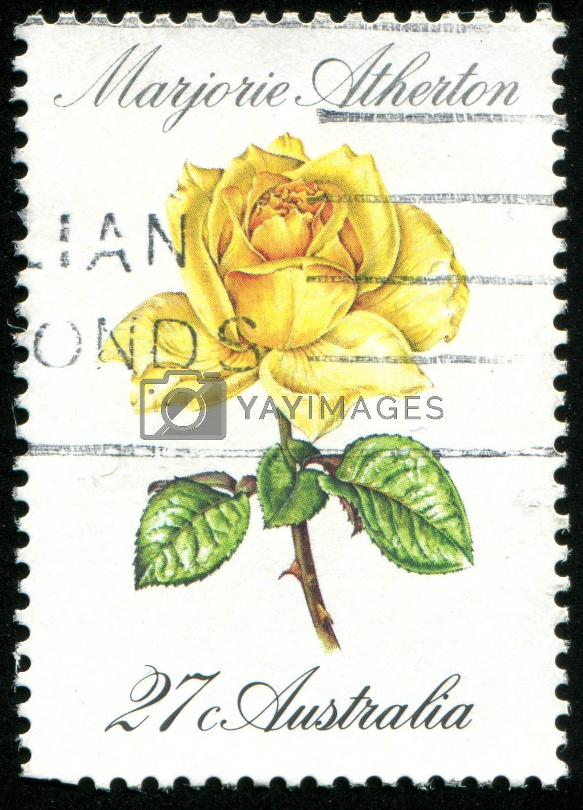 AUSTRALIA - CIRCA 1982: stamp printed by Australia, shows rose, circa 1982