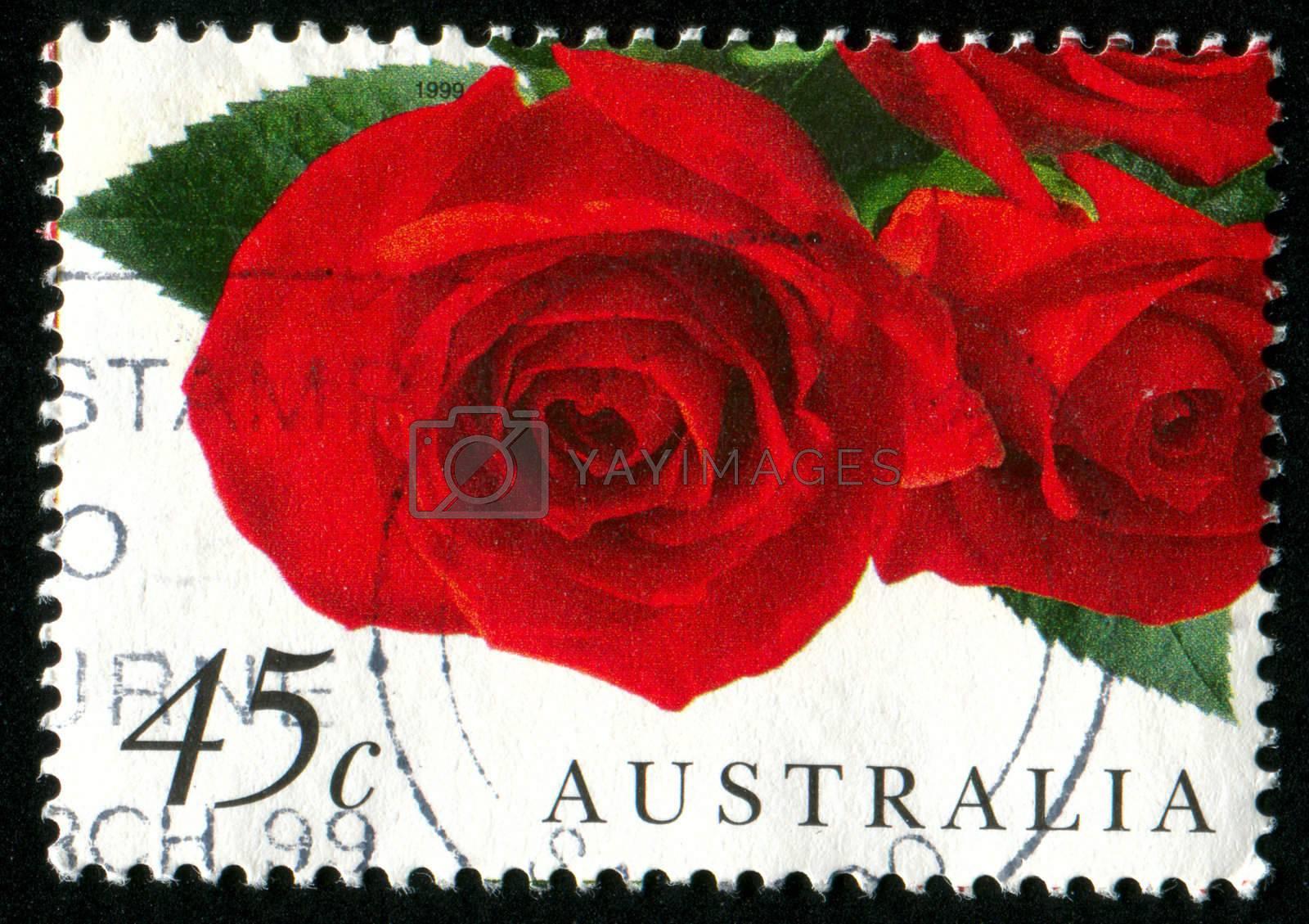 AUSTRALIA - CIRCA 1999: stamp printed by Australia, shows rose, circa 1999